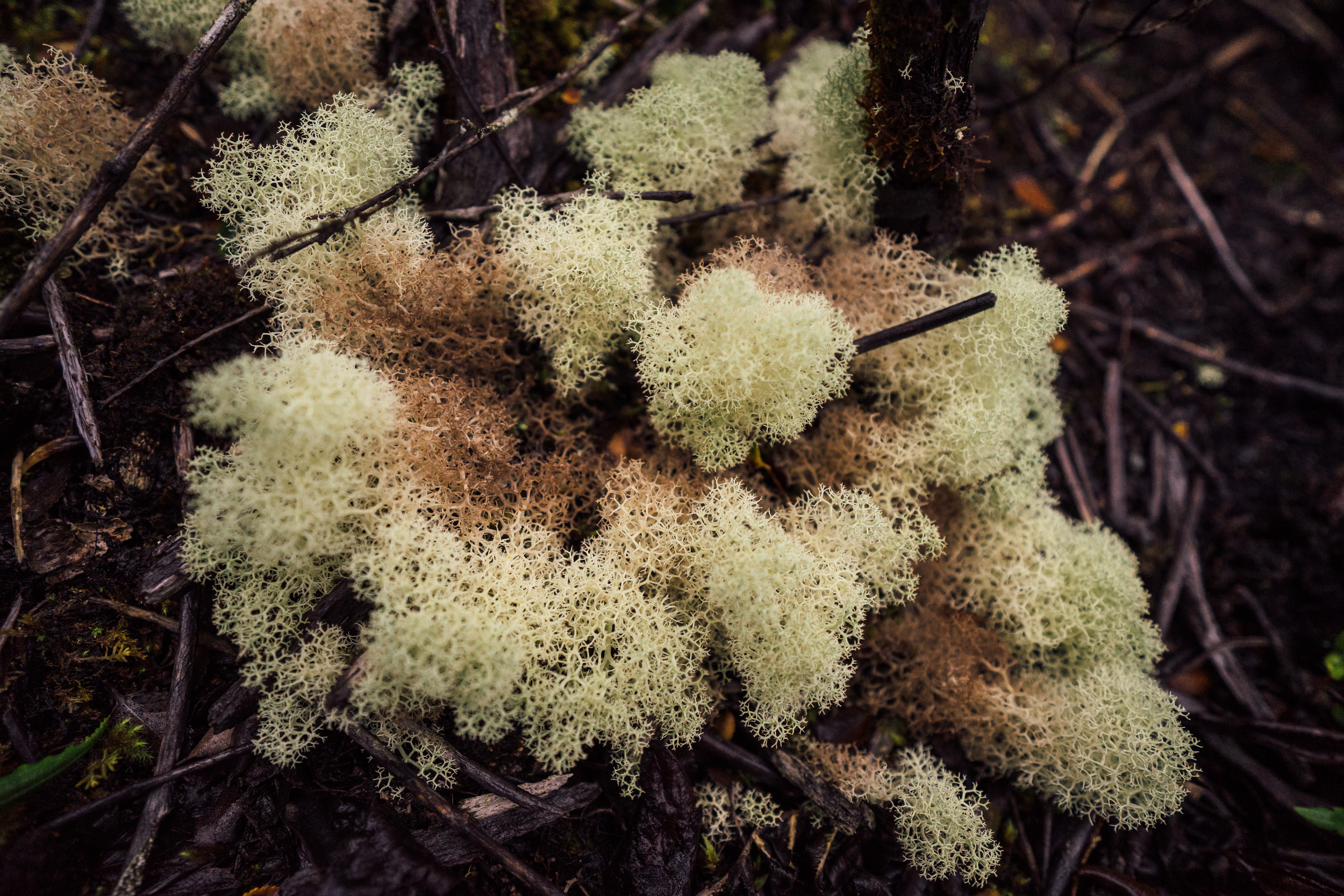 Some of the most incredible lichens