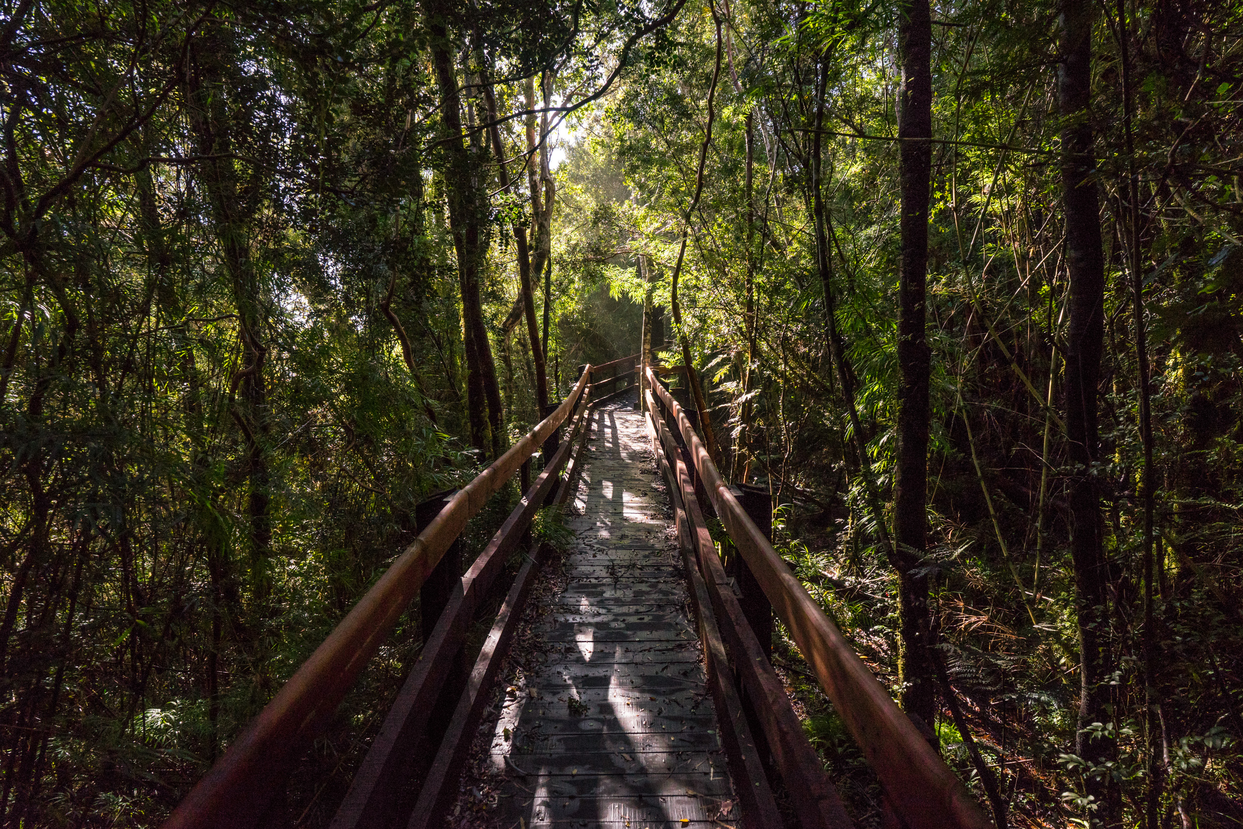 - One of the short hikes, the Colmillos (fangs) of Chaihuín, nearby the Valdivian Costal Reserve offices. It's a walk through the olivillo tree forest down to the beach where two rock formations are known as the