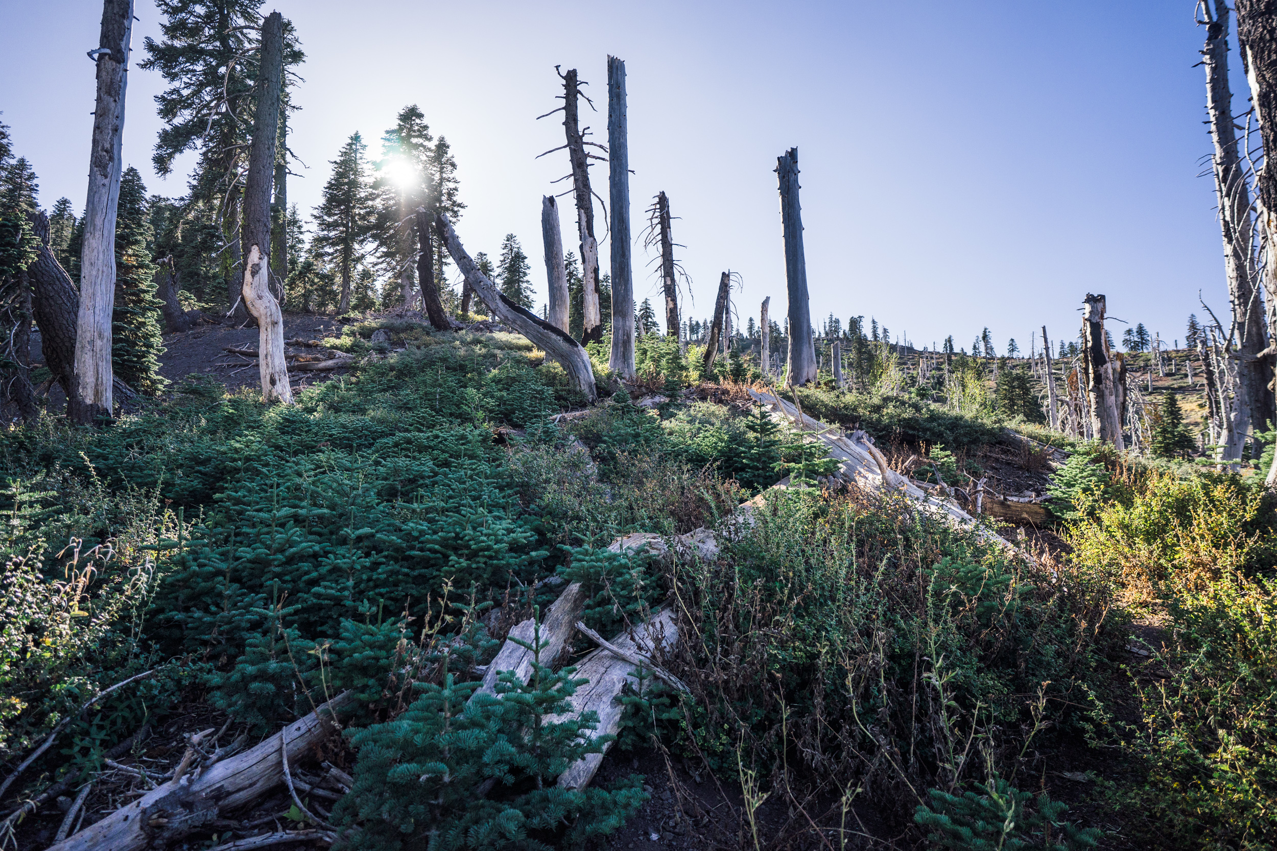- Almost at the top, the hike goes through an area which underwent a large wildfire in the past, but where young trees are already repopulating the slopes.
