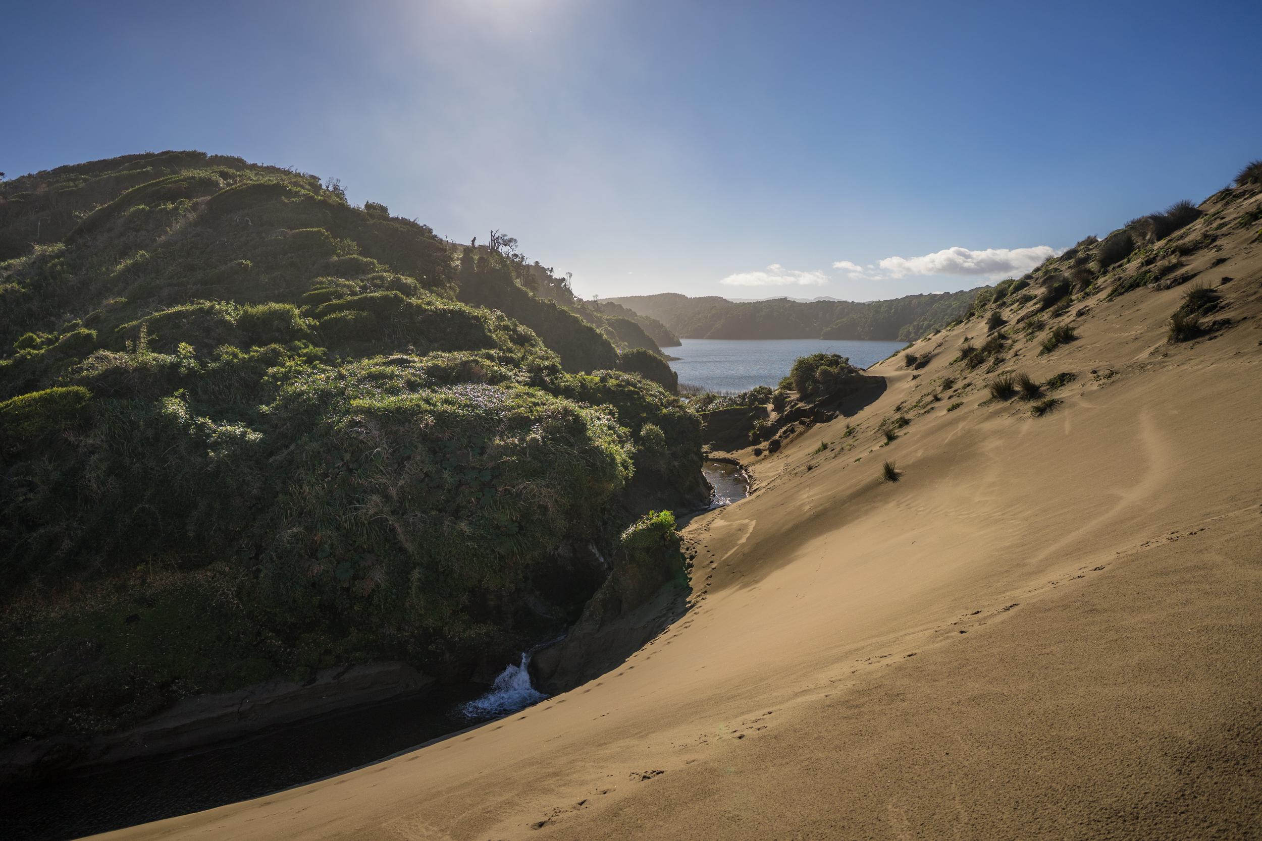 Valdivian Coastal Reserve dunes, Chile