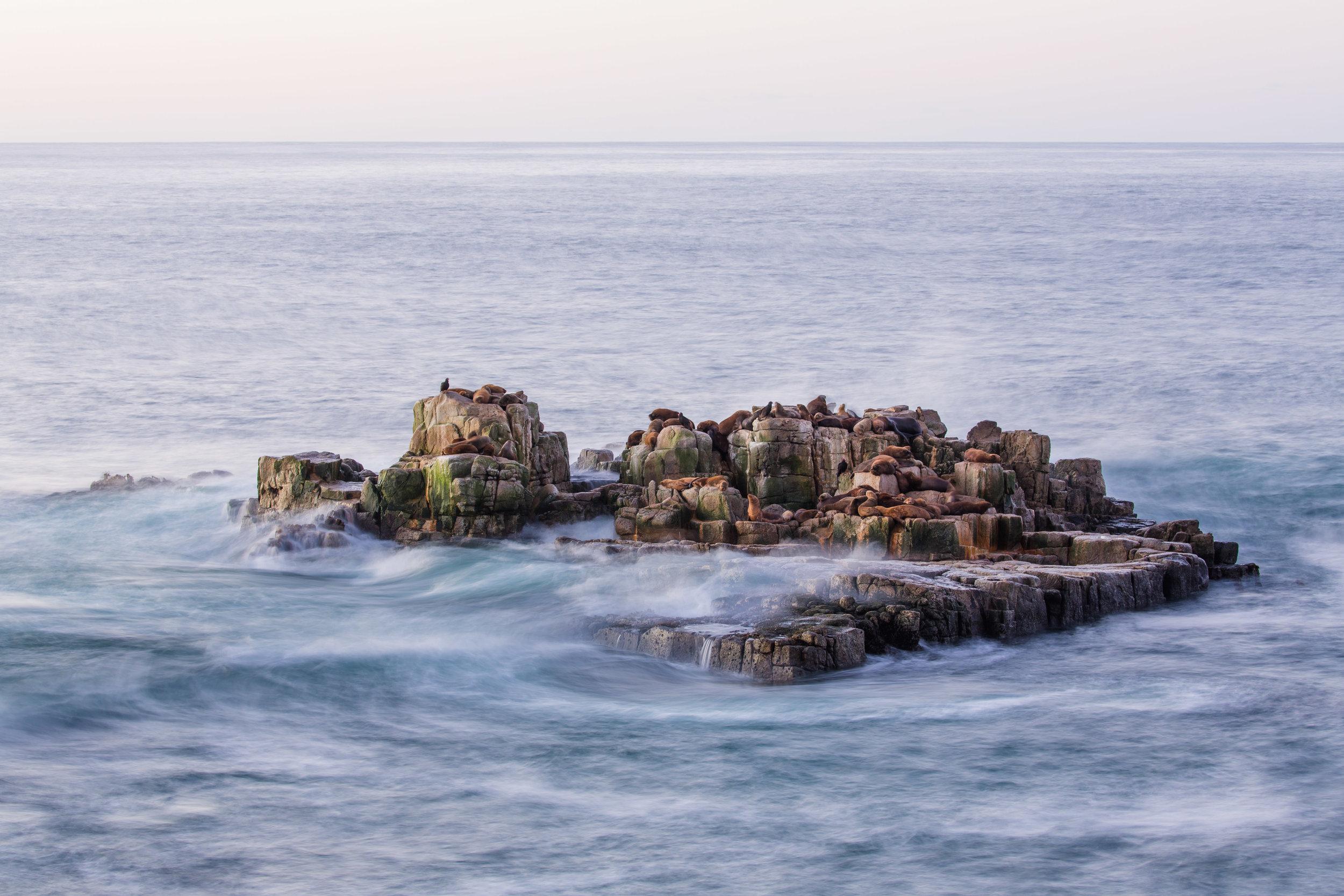 Sea lion colony in the Valdivian Coastal Reserve, Chile