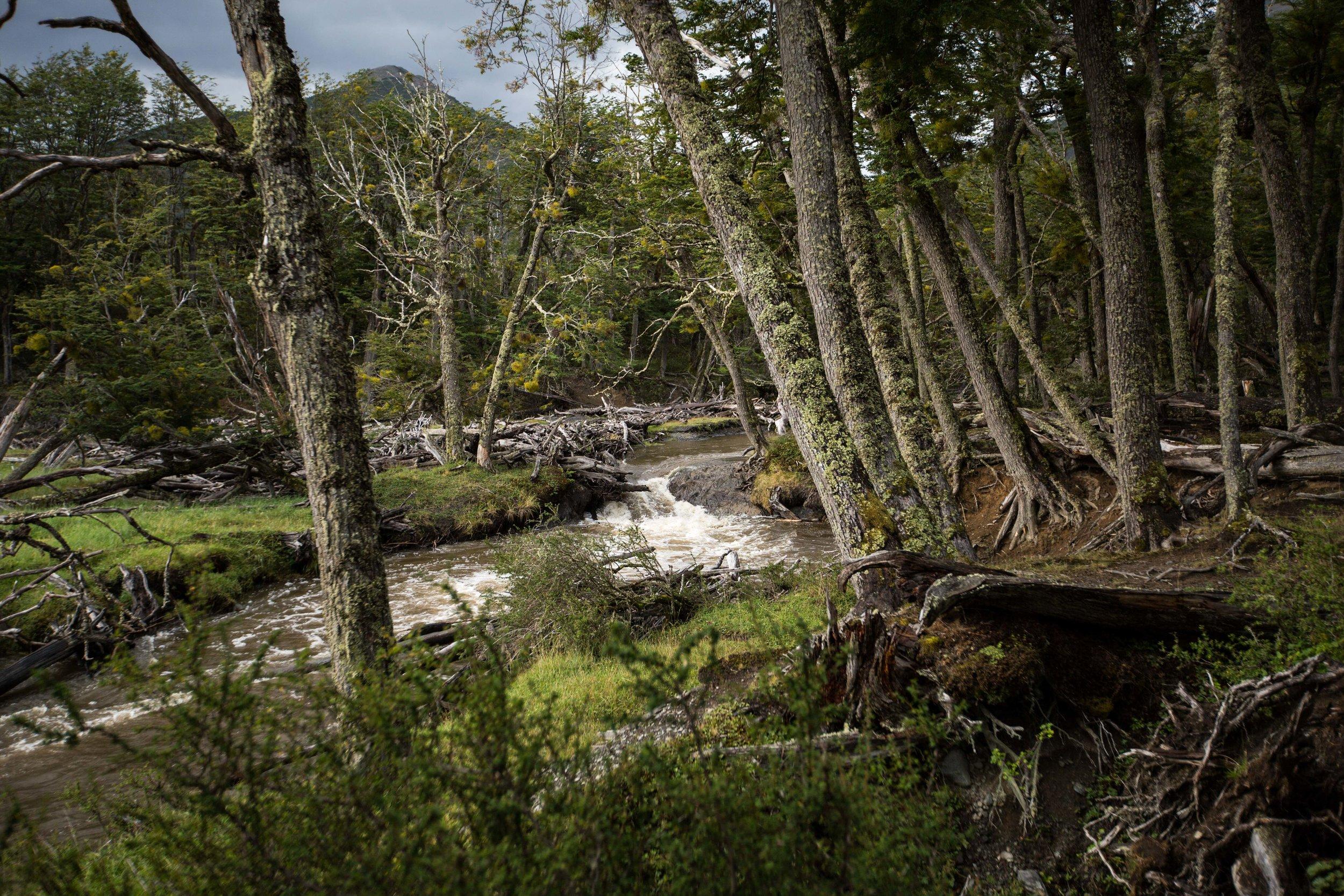 The green, lush landscape inside Karukinka Park, Tierra del Fuego