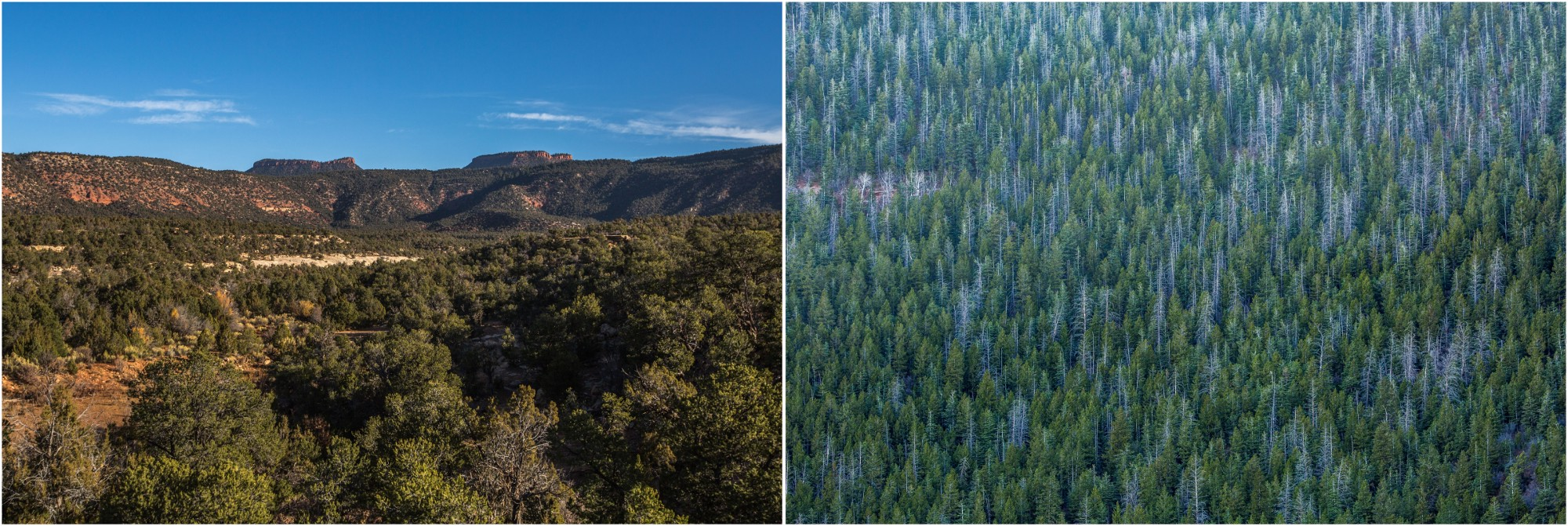 - Left: The Bears Ears buttes in the distance. They are believed to be a shrine that protects the Navajo/Diné. Right: The heights of the mountains in the Manti-La Sal National Forest give way to pine forests and aspen groves.