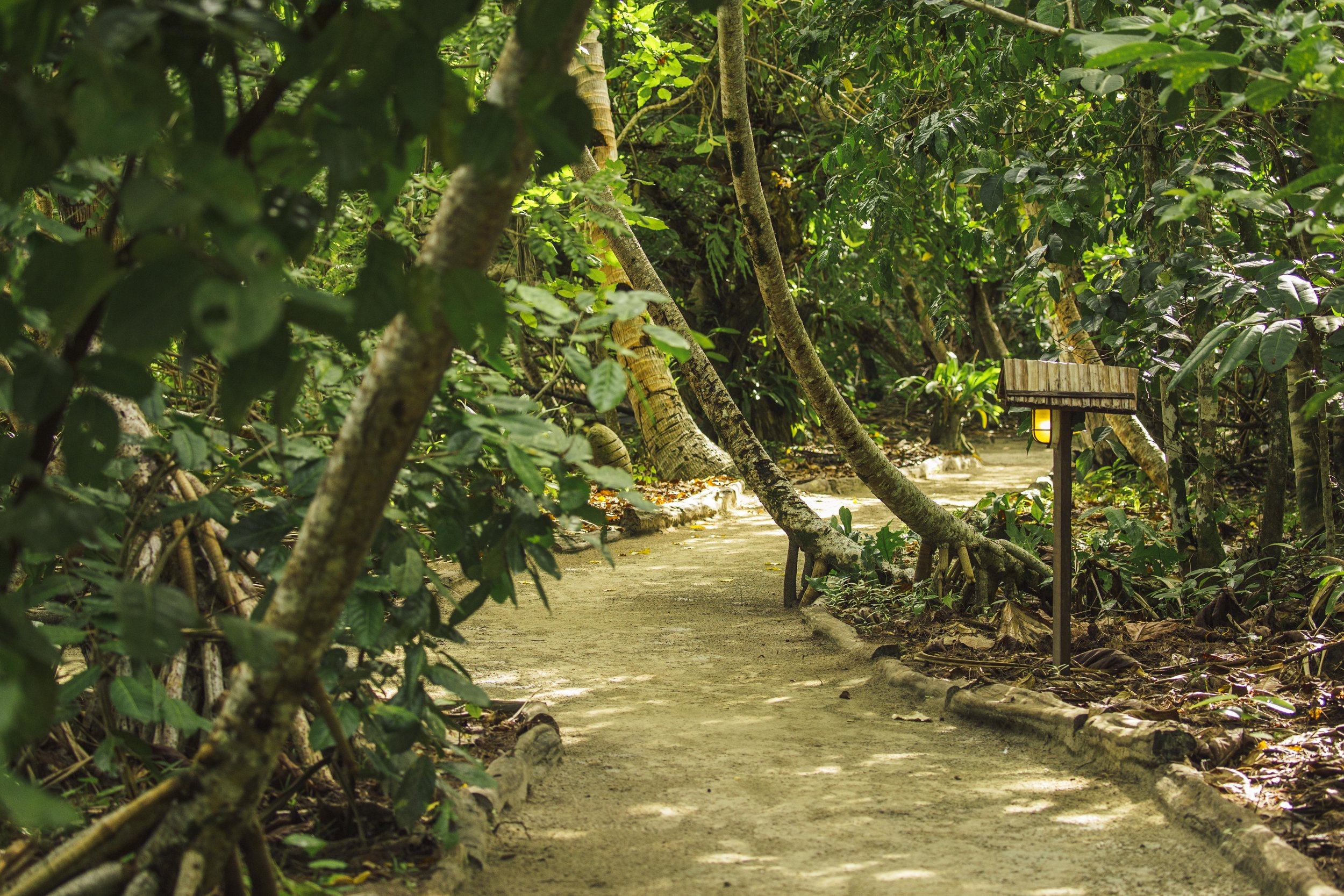 pathway inside the resort - Out of respect for sustainability and conservation, the habitat within which Kri Eco was built was minimally altered, and trees and plants continue to encroach on the pathway, contributing to the feeling that you have arrived in a tropical paradise.