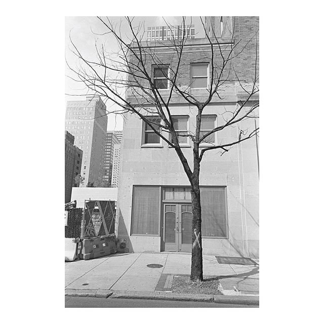 (not a palm tree) Philadelphia, PA 2019