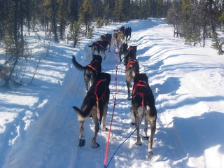 Iditarod trail between John and Nikolai