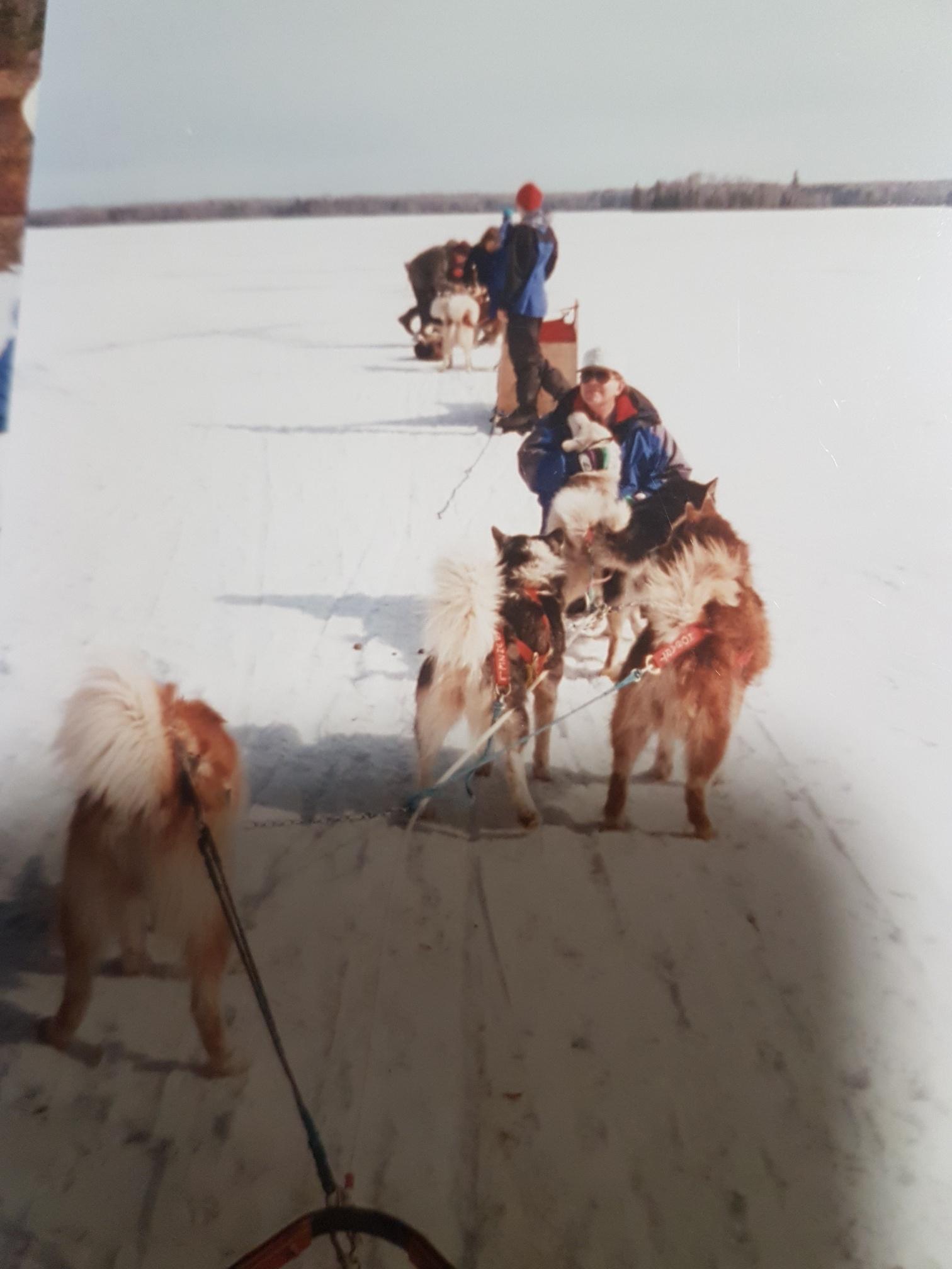 """""""Australian Mawson Huskies that I ran in Minnesota in 1998."""""""