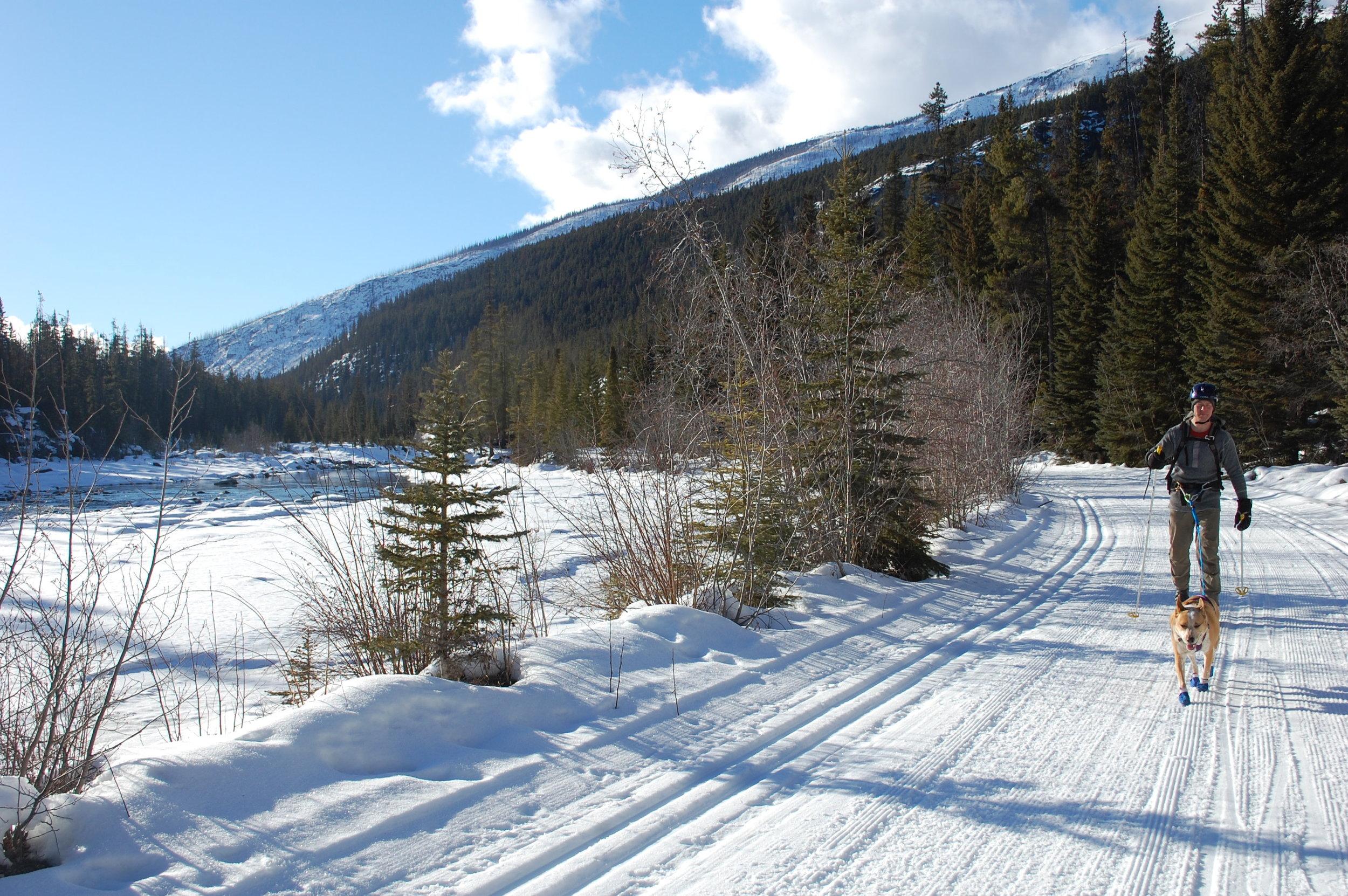 Skijoring along the Whirlpool River Jasper National Park, AB