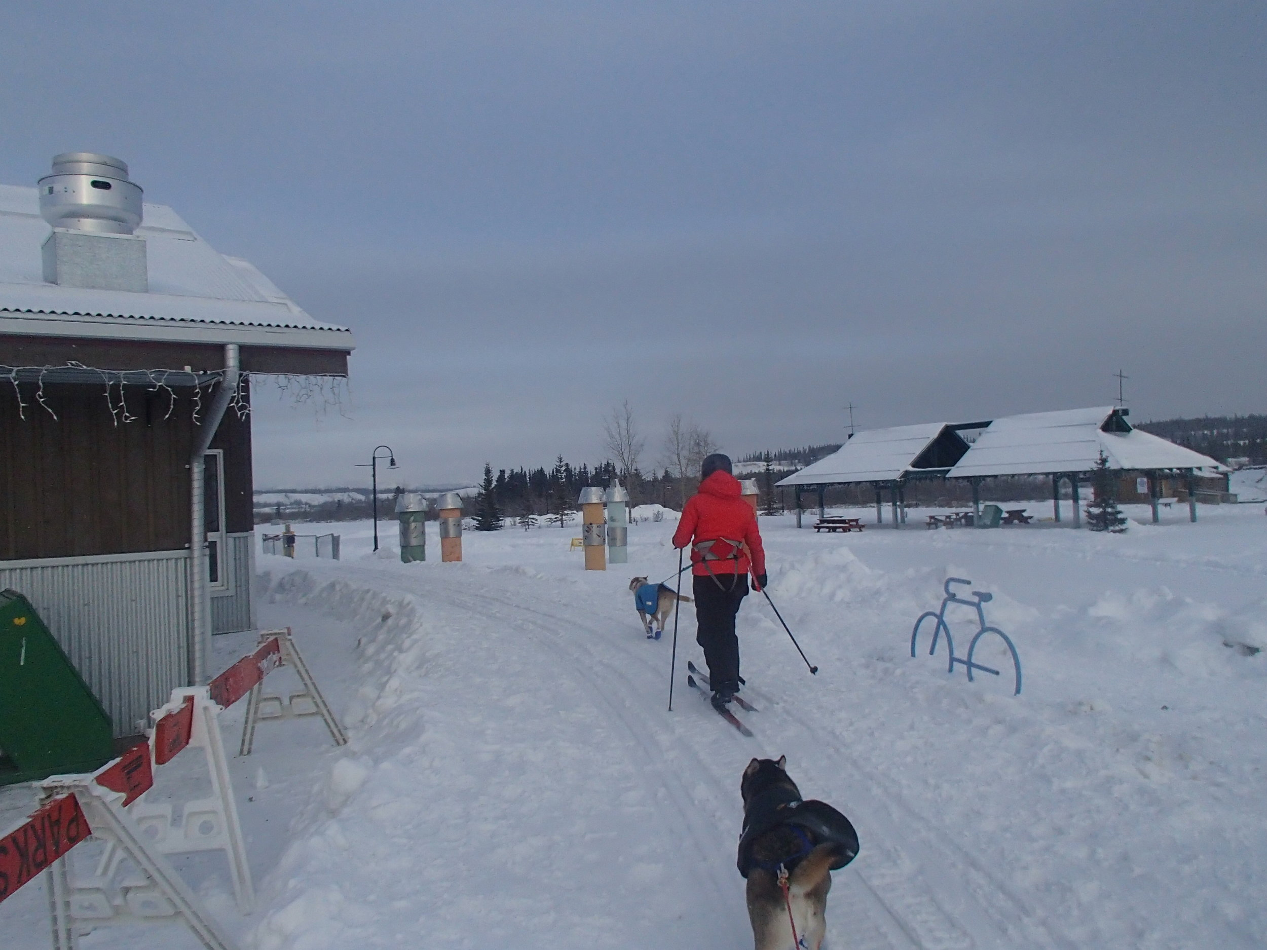 Skijoring out of the start chute of the Yukon Quest in Whitehorse, YK