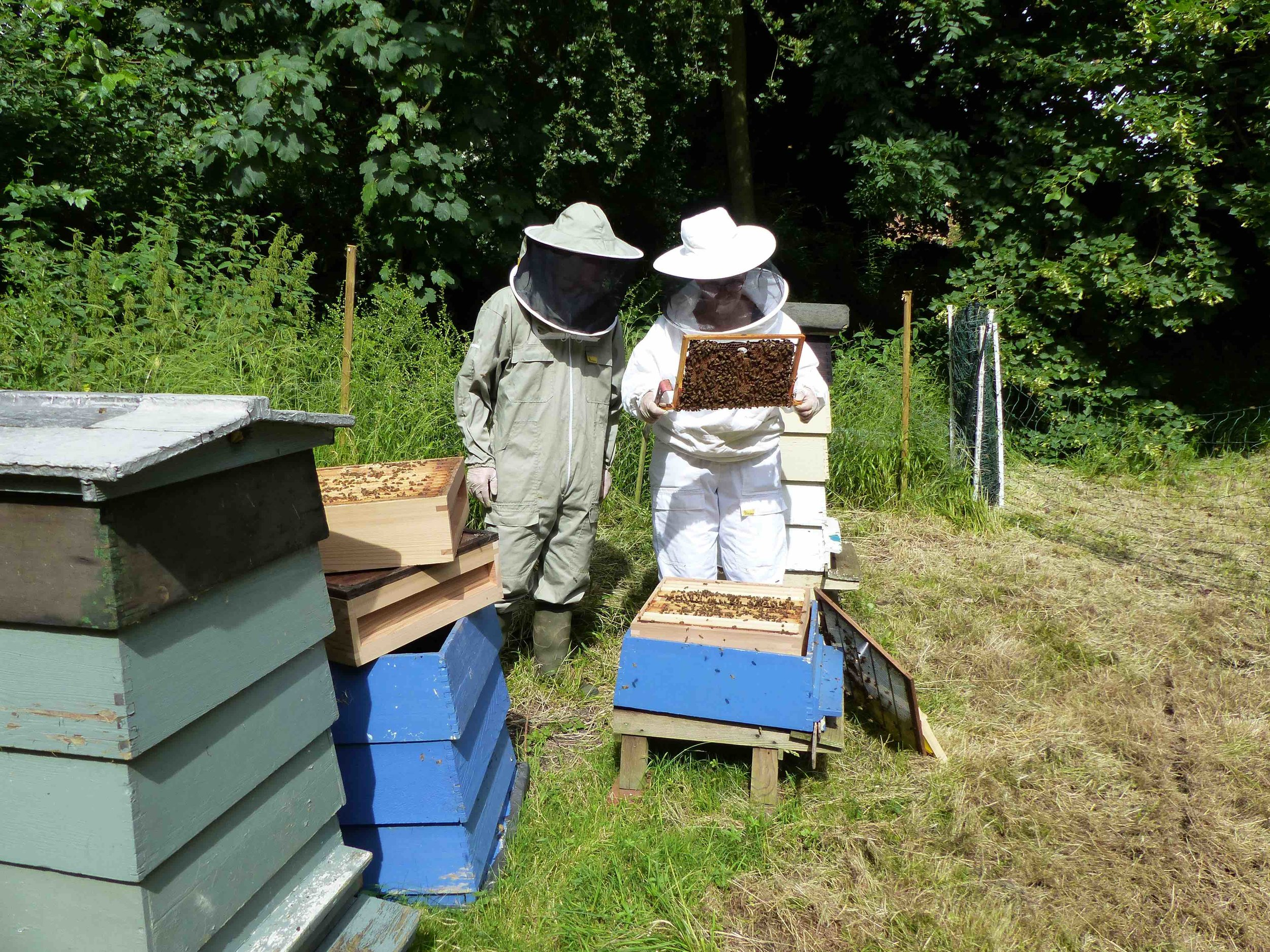 The British Bee Keeping Association - We proudly support the BBKA and their efforts to build bee populations in the UK. They are leaders in research and conservation and are passionate about inspiring new generations of Bee keepers into the wonderful world of BEEs.Find out MORE HERE www.bbka.org.uk