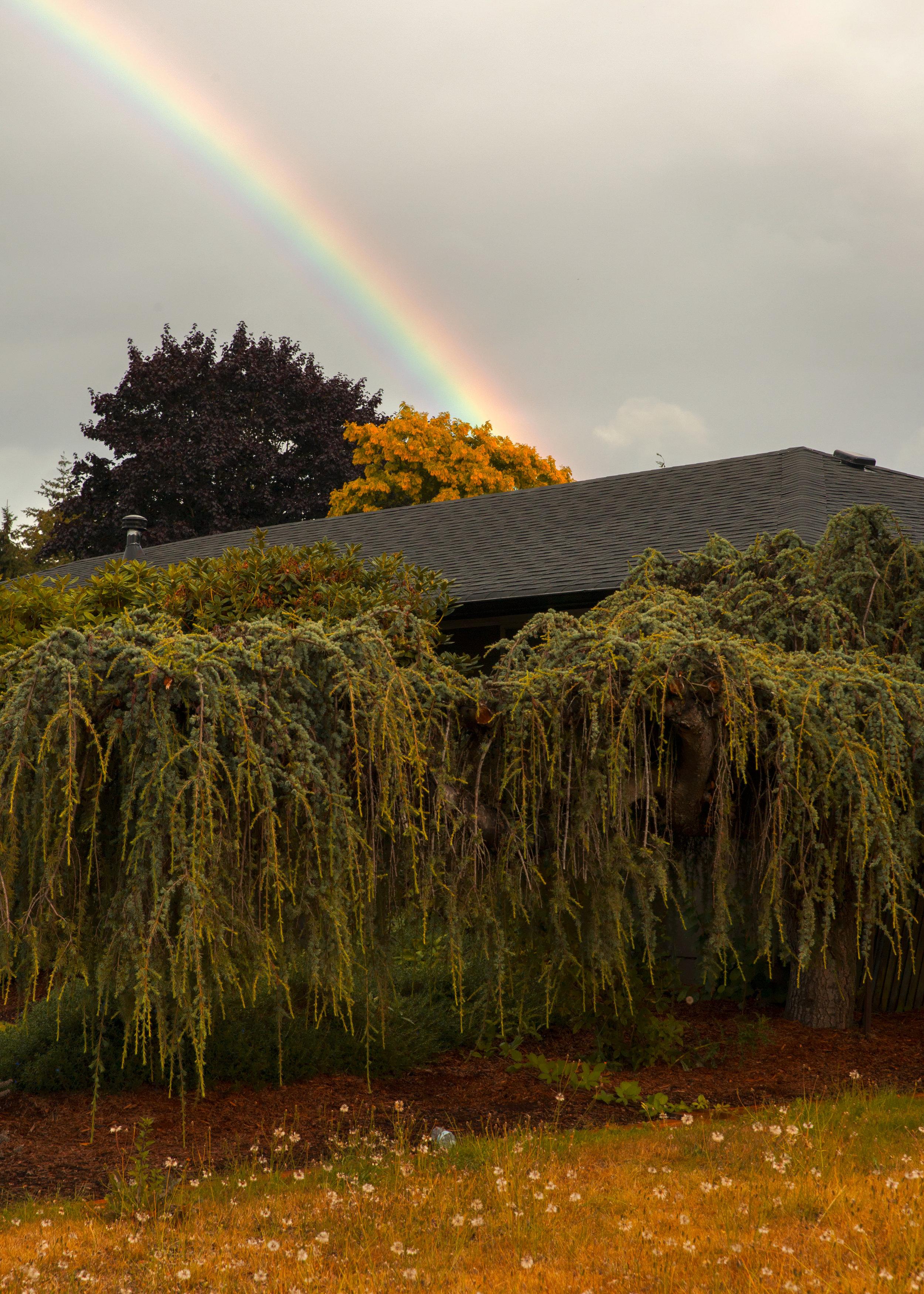 RainbowTree.jpg