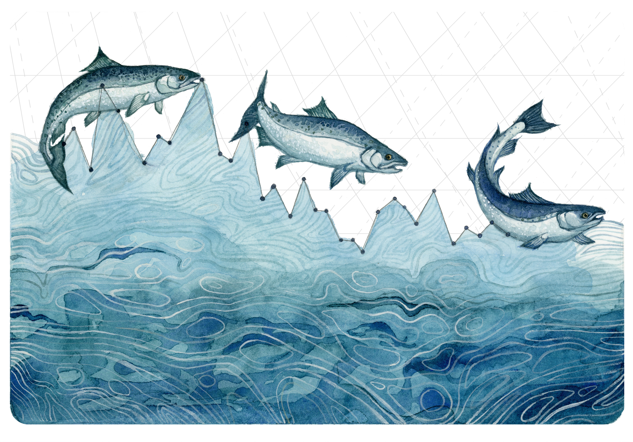 Salmon Population Decline (watercolor).jpg