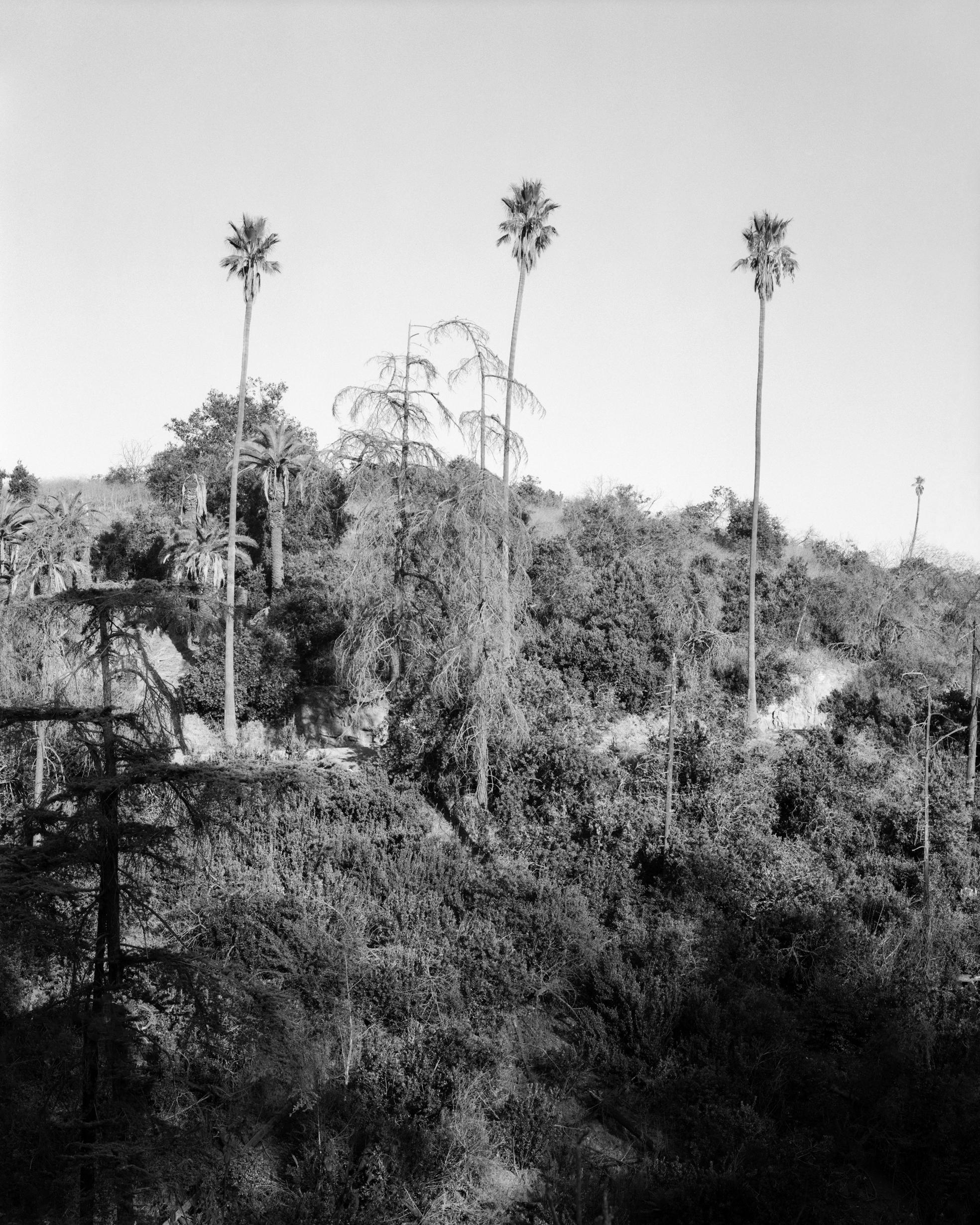 Psychscape 18 (Banner Ridge, CA) 2017