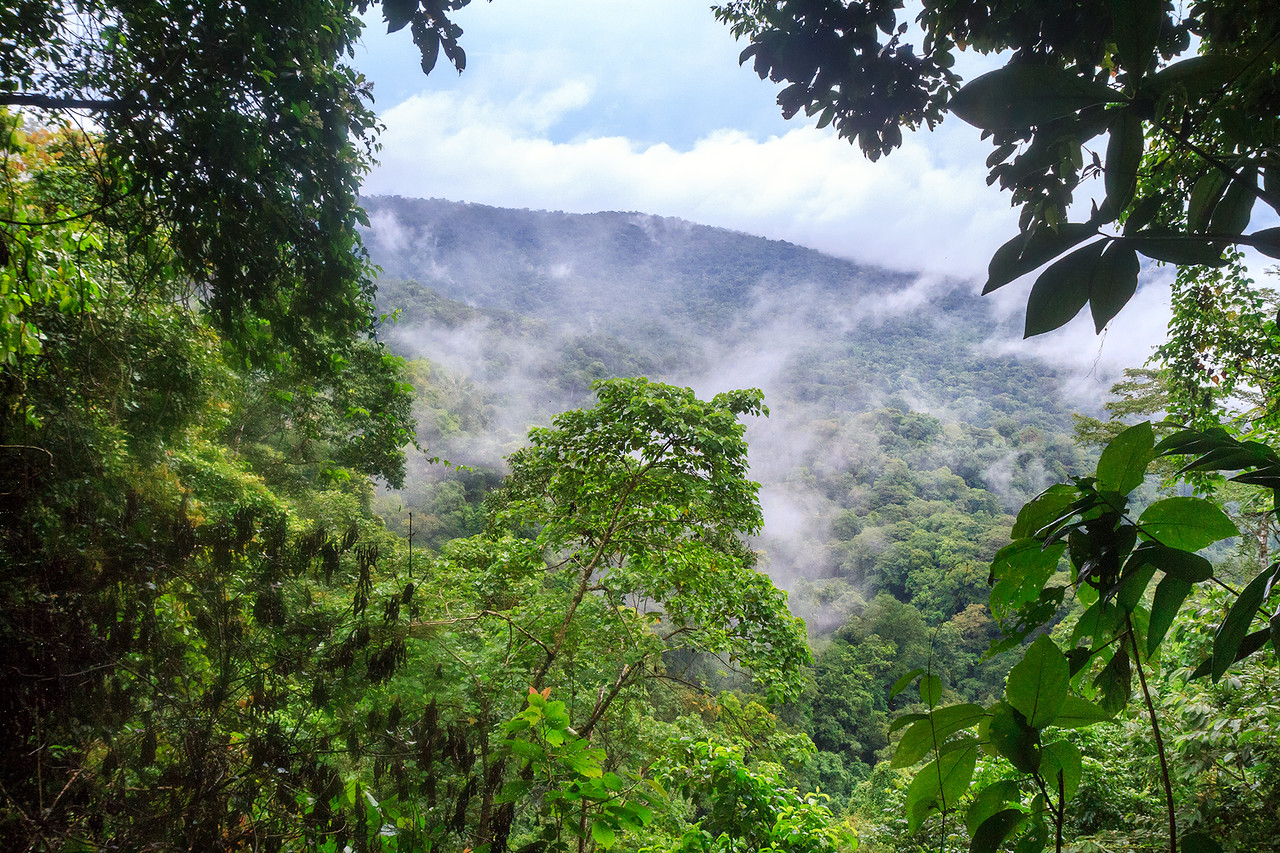Jungle View S.A. - Isla Colon, Panama