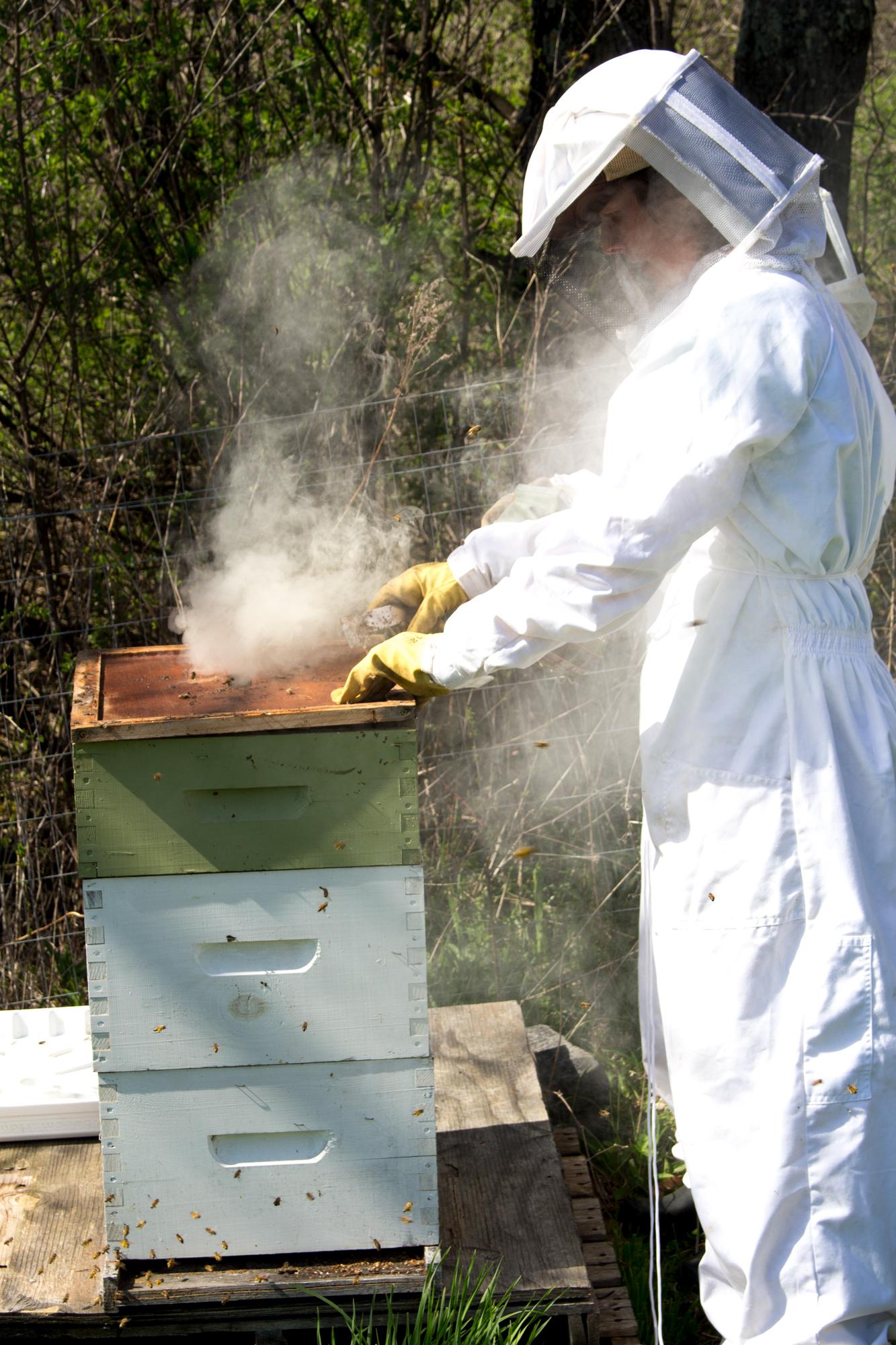 Meriwether doing some hive checks at Philo Ridge Farm in Vermont.