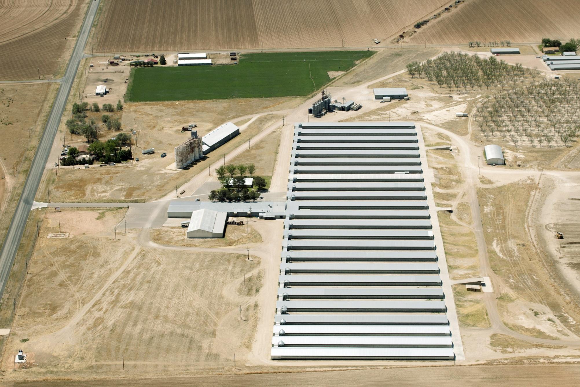 Organic chicken farm photo courtesy of the Cornucopia Institute.