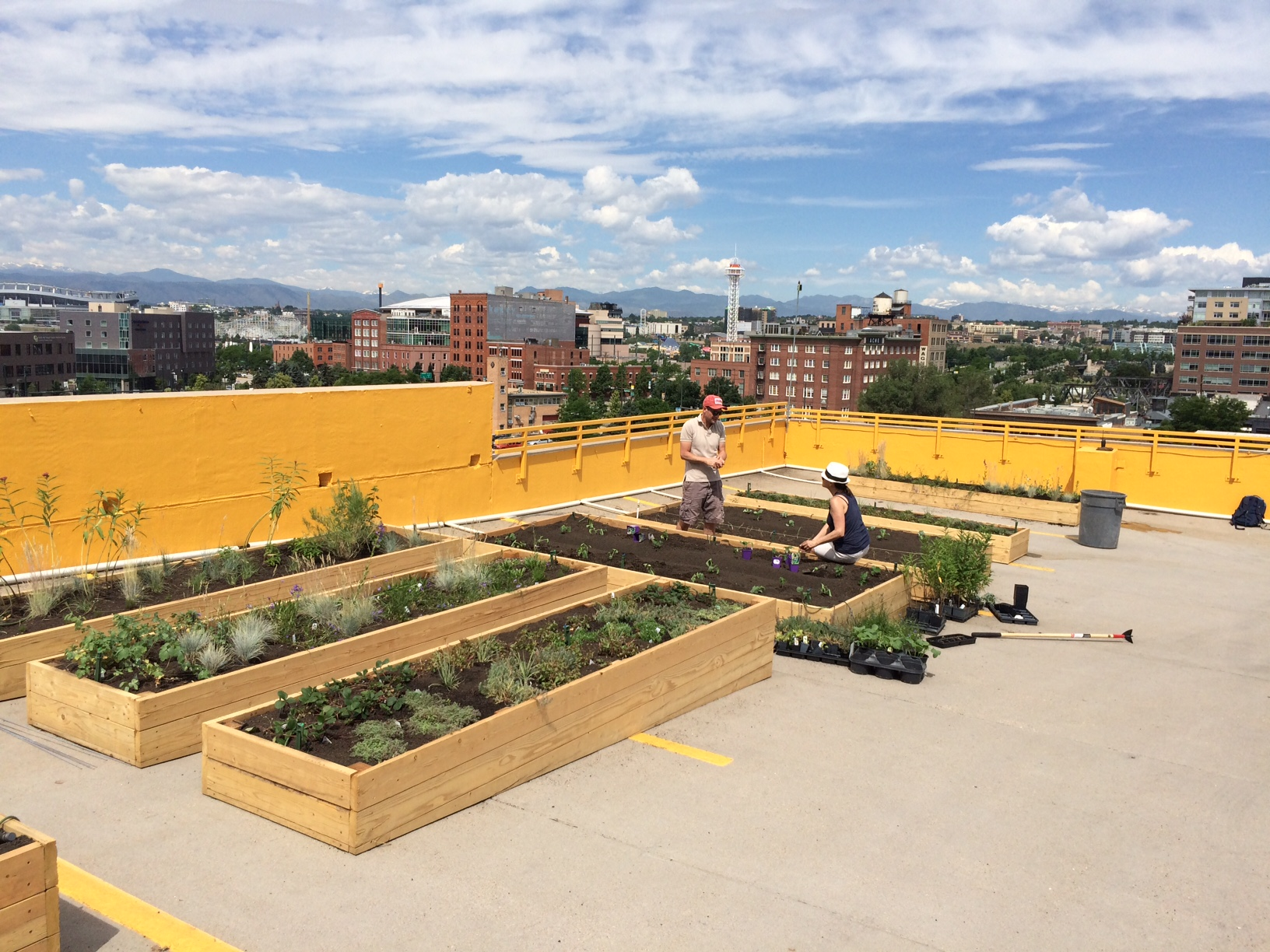 Our team planting the beds at Larimer Uprooted, Denver's first open air roof top urban farm