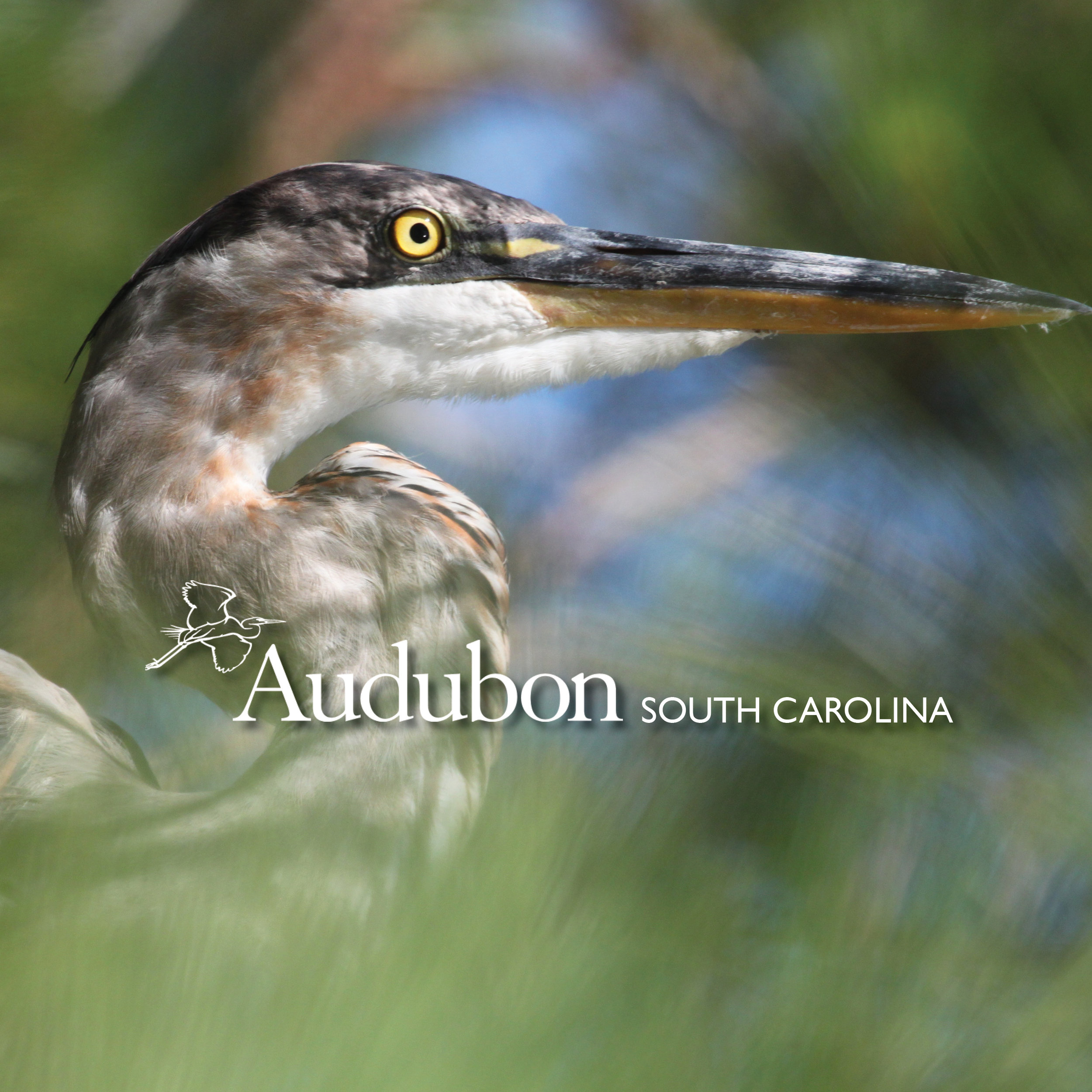 Audubon South Carolina