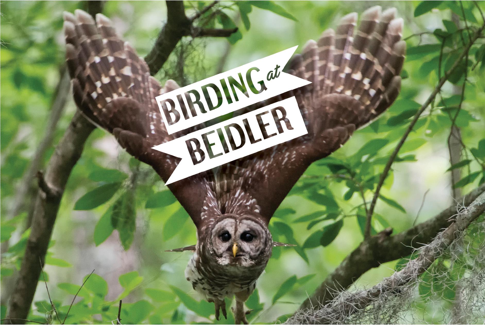 Birding at Beidler Forest