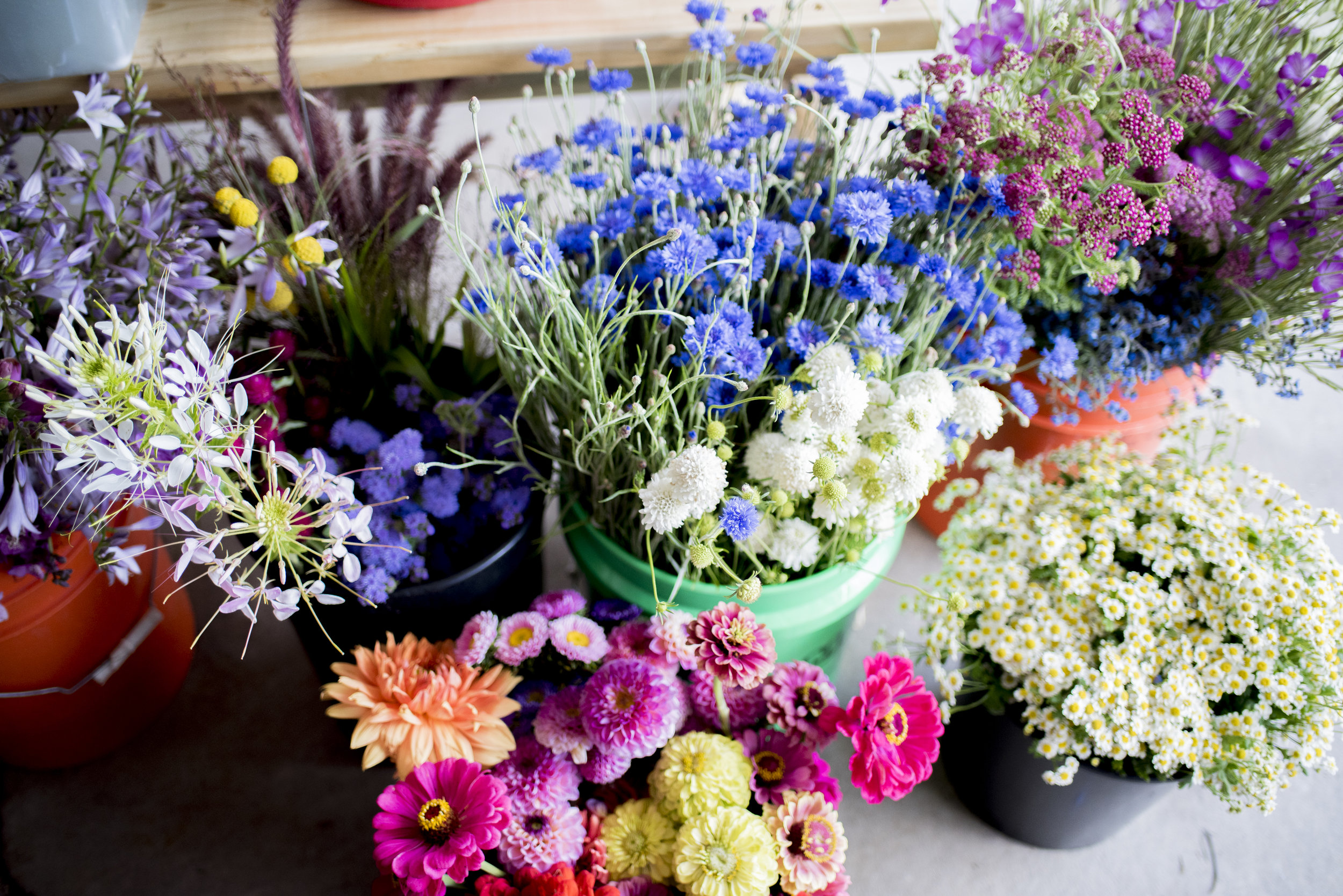Beezies blooms workshop bouquet building 1.jpg