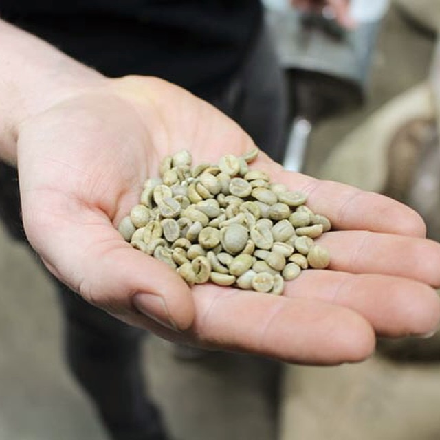 Fresh Coffee Beans Unroasted