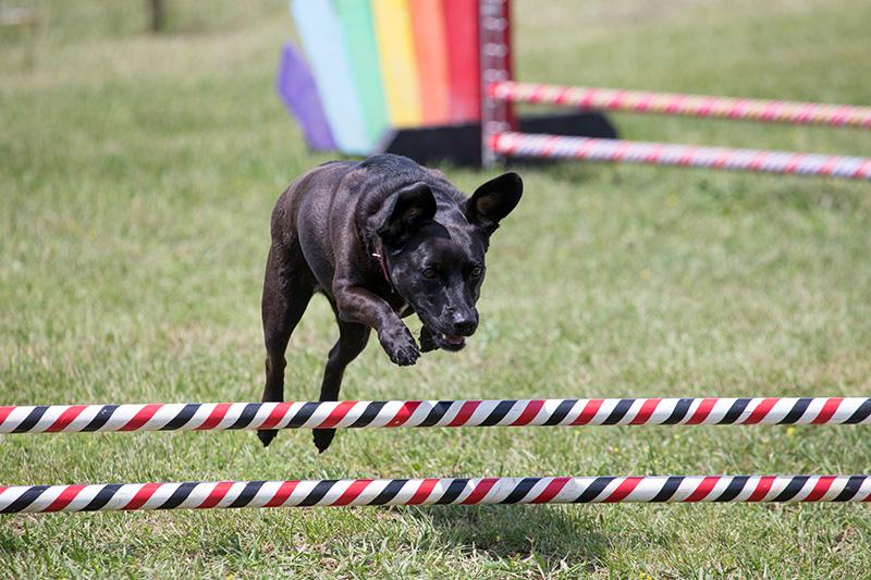 Evita over jump reduced.jpg