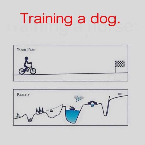 Training a dog copy.jpg