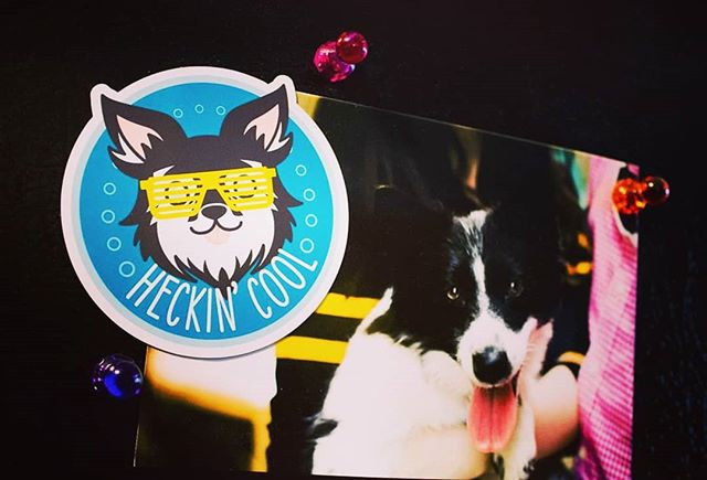 Here's my Heckin' Cool magnet in use holding up a picture of my dog who was the inspiration behind it. She's such a cutie.  For sale on my etsy! Link in bio.  #magnet #productphotography #etsy #dogs #dogsofinstagram #designer #graphicdesign