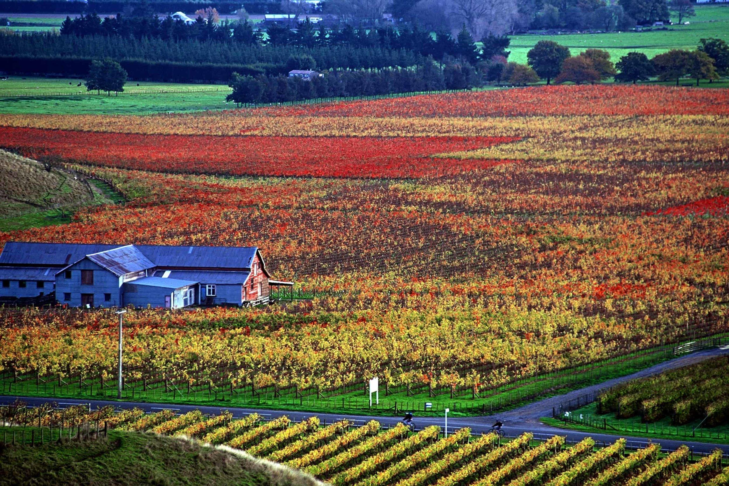 Autumn Vines