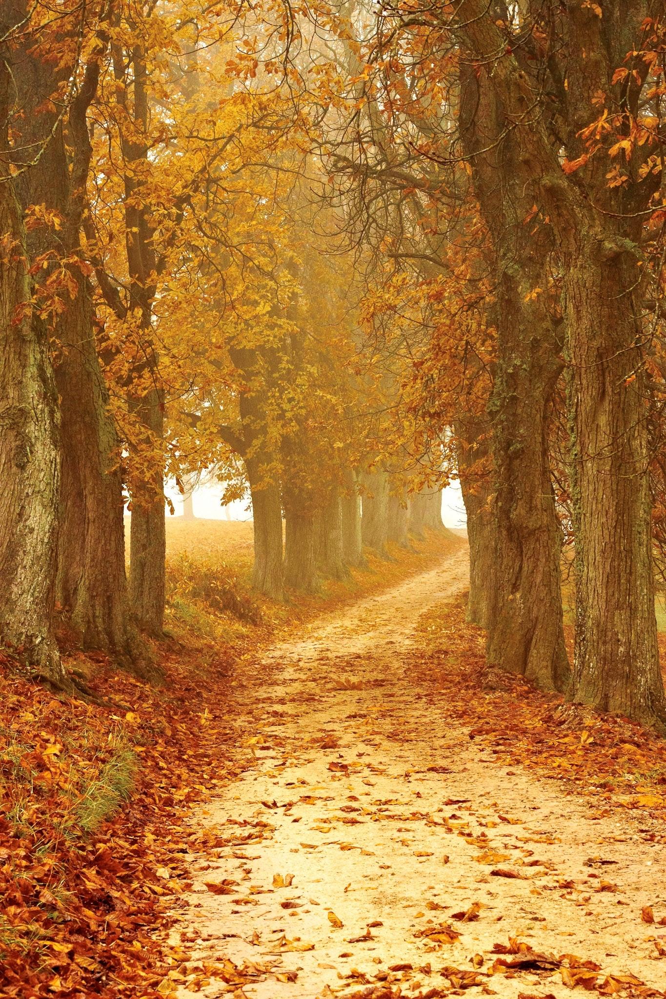 autumn-autumn-colours-brown-358238.jpg