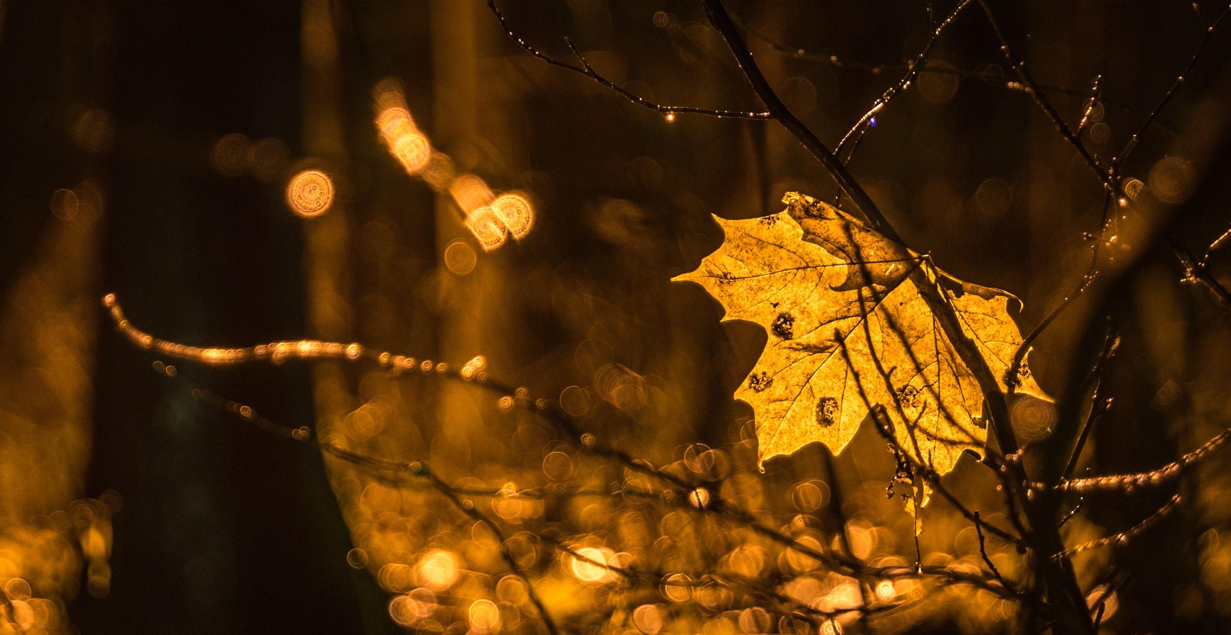 autumn-blurred-background-bokeh-754072.jpg