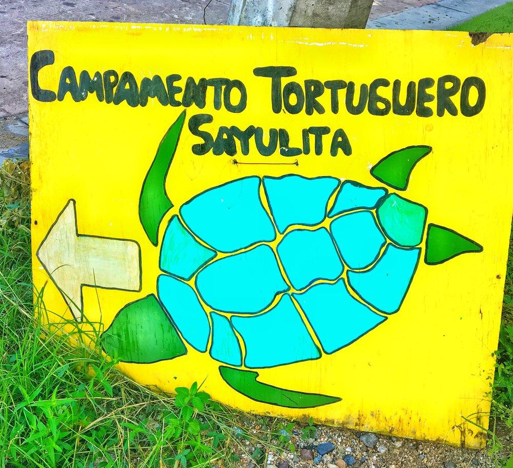 Turtle Preservation Sayulita.jpg