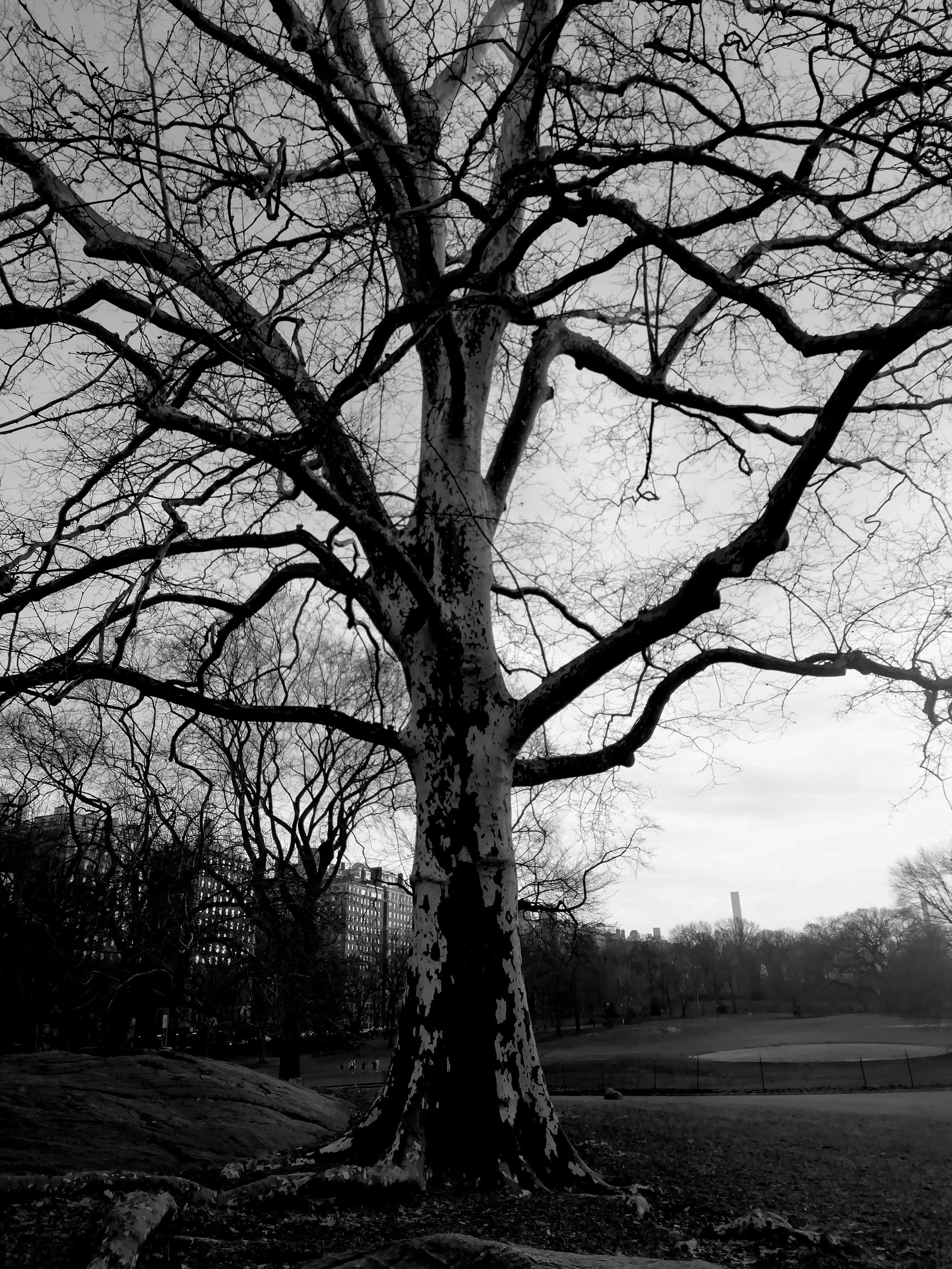 park 6.jpg