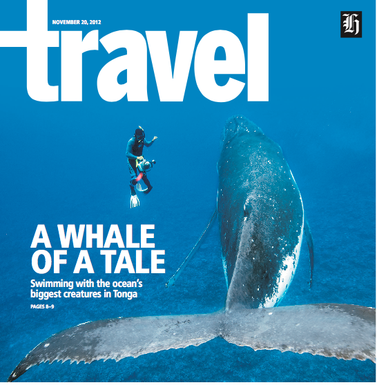 Travel feature about swimming with whales in Tonga                                         New Zealand Herald    Photo / Thinkstock