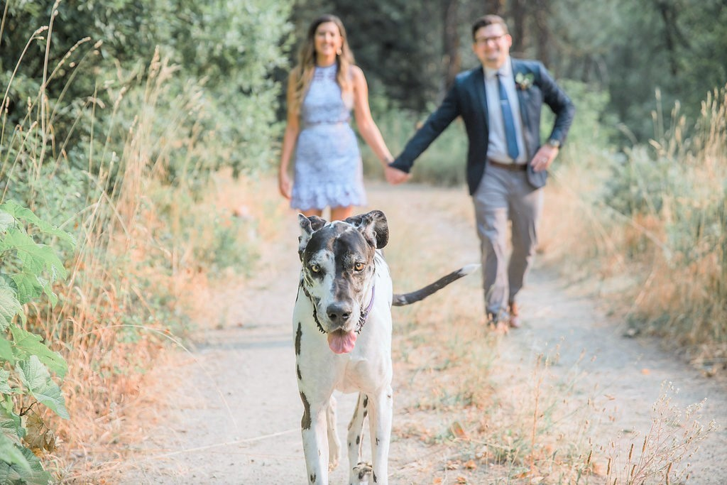 anniversary-photos-with-dogs