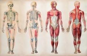 Anatomy Sheets -