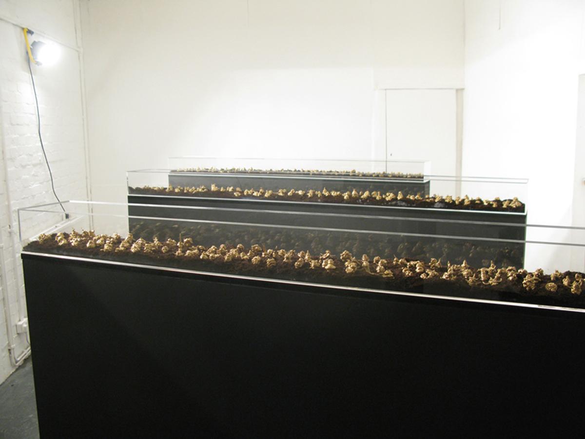 Hoard models in Gallery 01 60.jpg