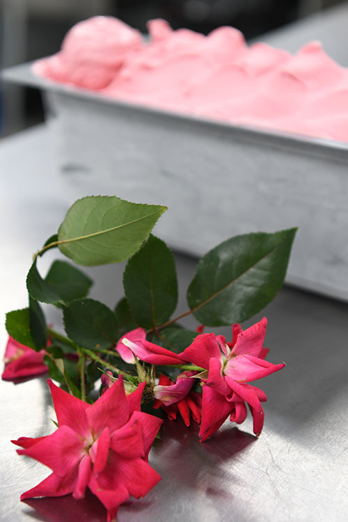Pom-Rose-2.jpg