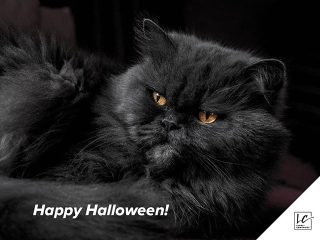 It's the purrrrrfect day for #Halloween 🎃😼