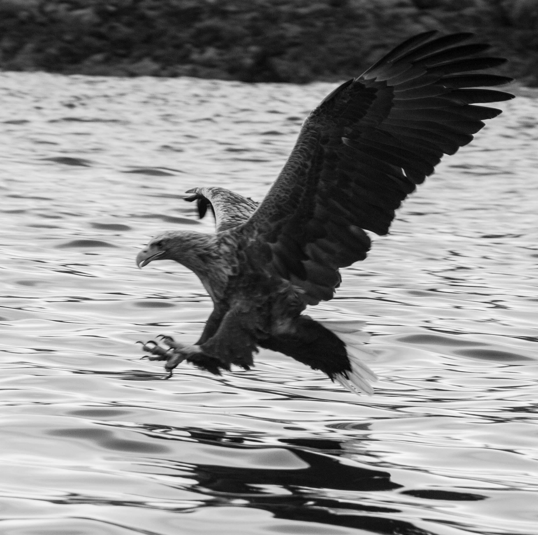 FAUNA: Great blue heron, red tailed hawk,bald eagle, wild turkey, pheasant, beaver, otter, fox, deer, coyote, black bear