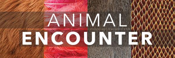 AnimalEnc-newsletter.jpg