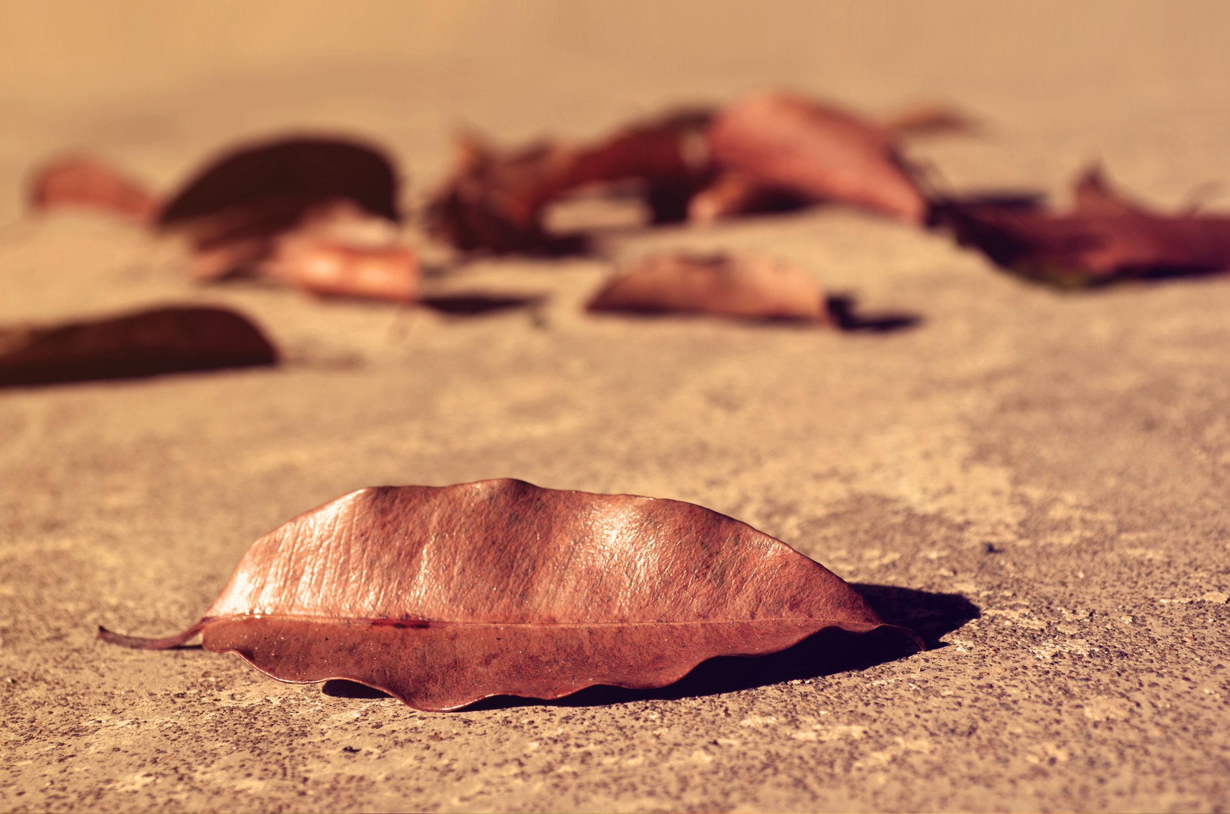 fallen_leaves_hires.JPG