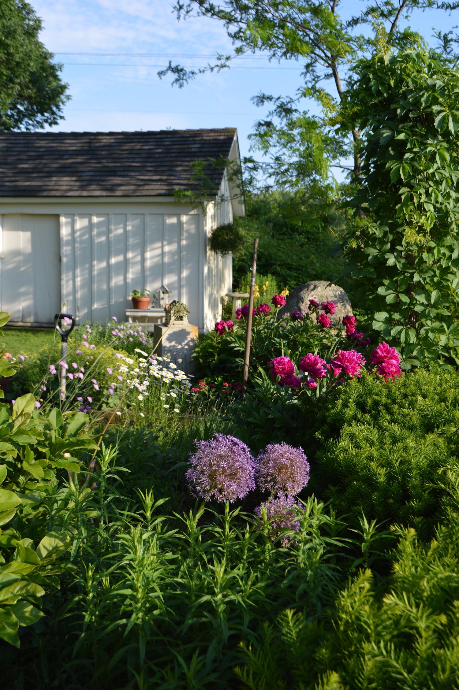 garden4:sized.JPG