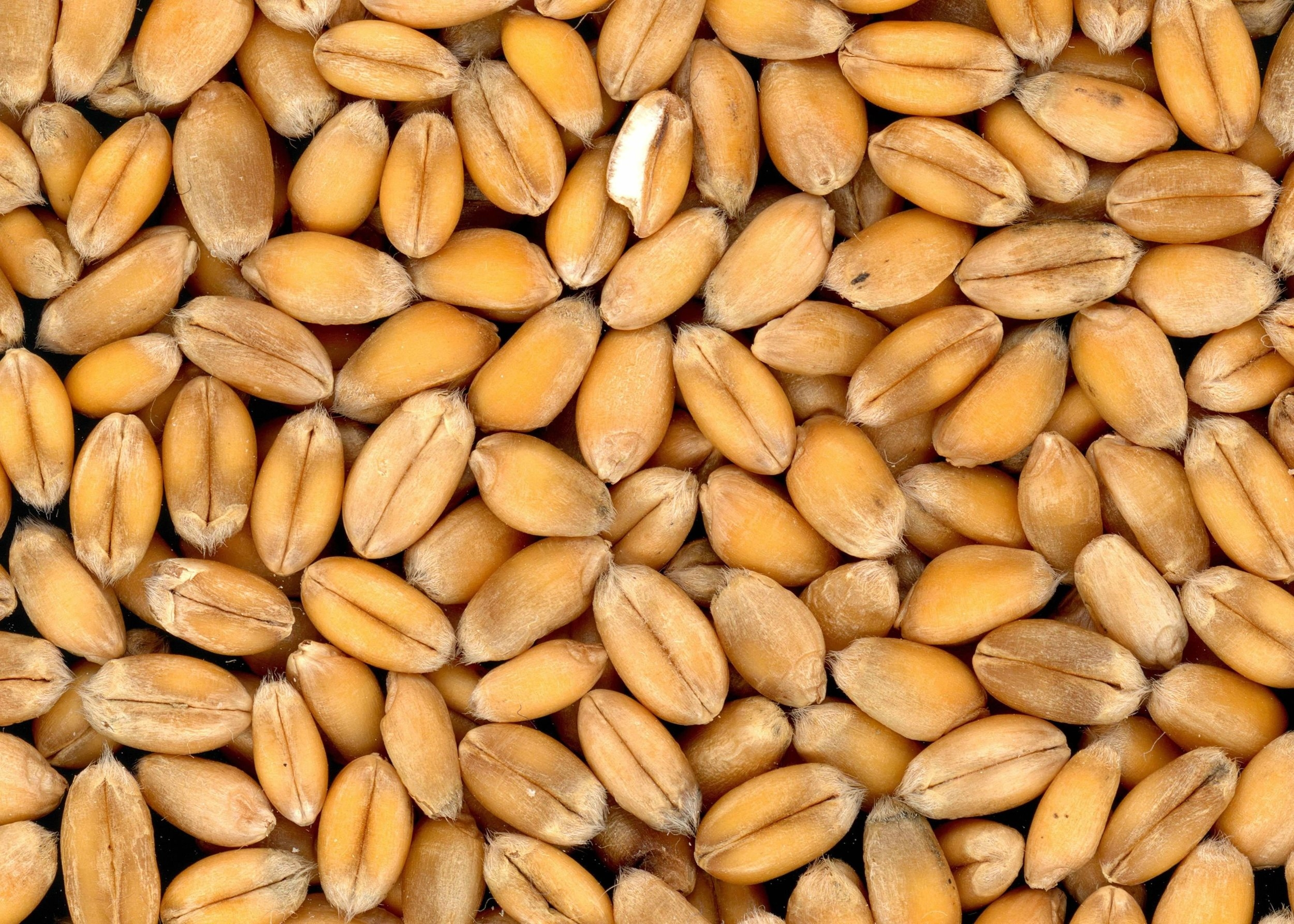 Cooking Healthy Hearty Grains