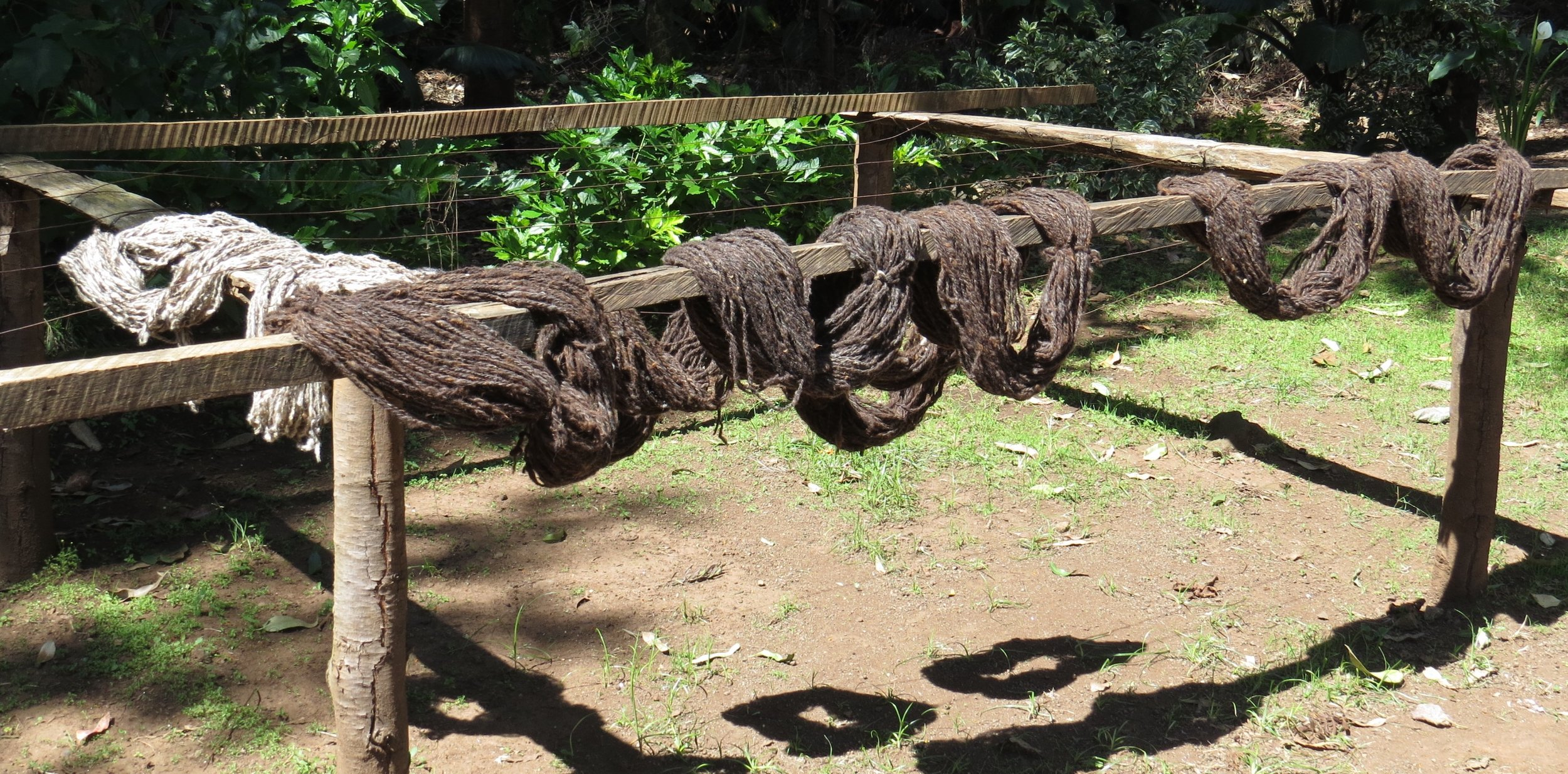 Yarn, spun, washed and out to dry