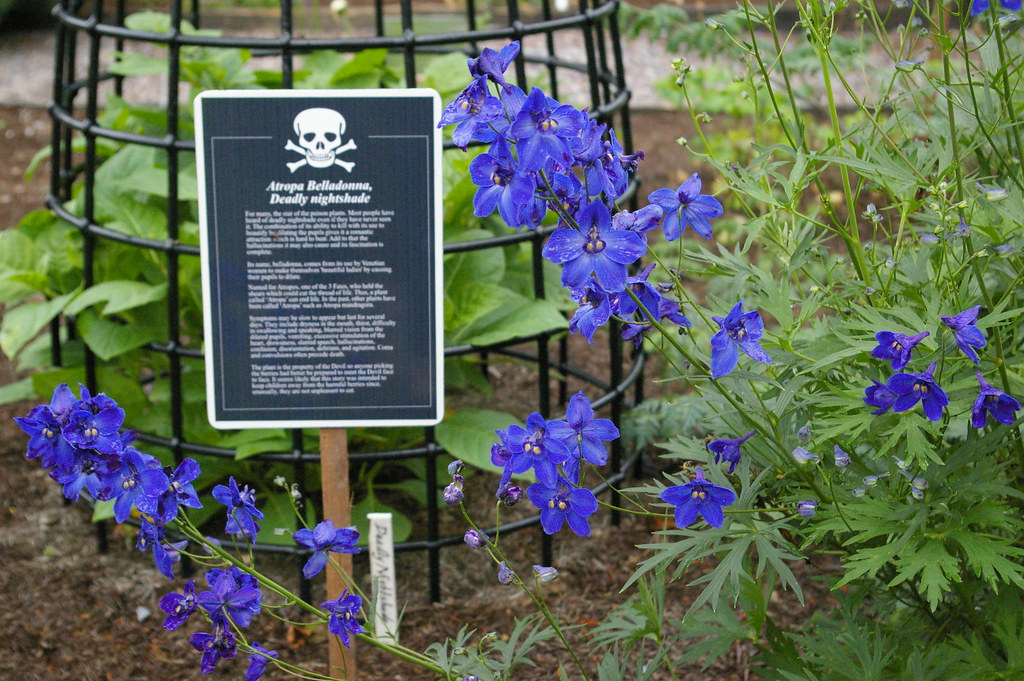 The poison garden at Blarney Castle in Ireland