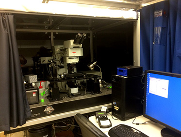 Multiphoton Microscopy