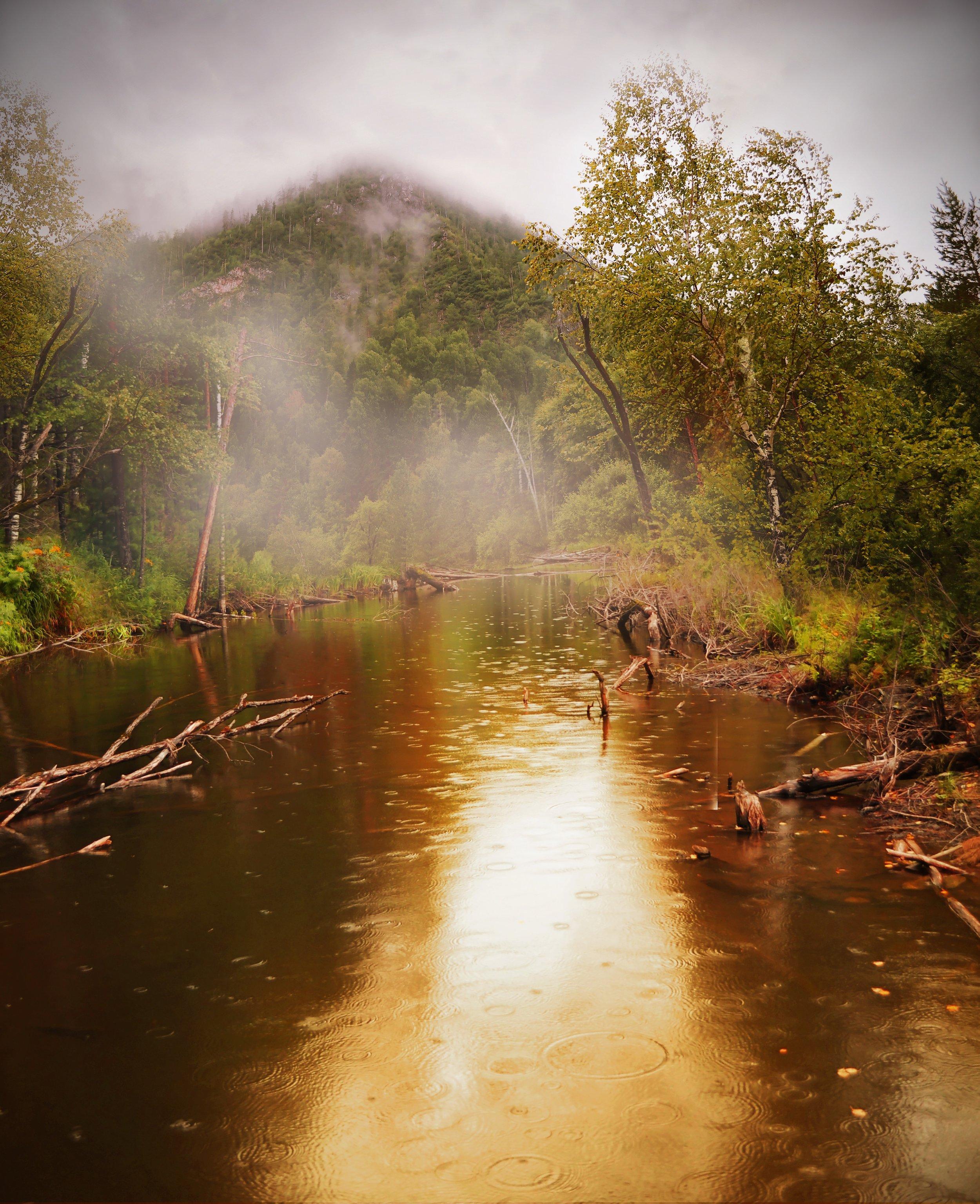 forest-22118.jpg