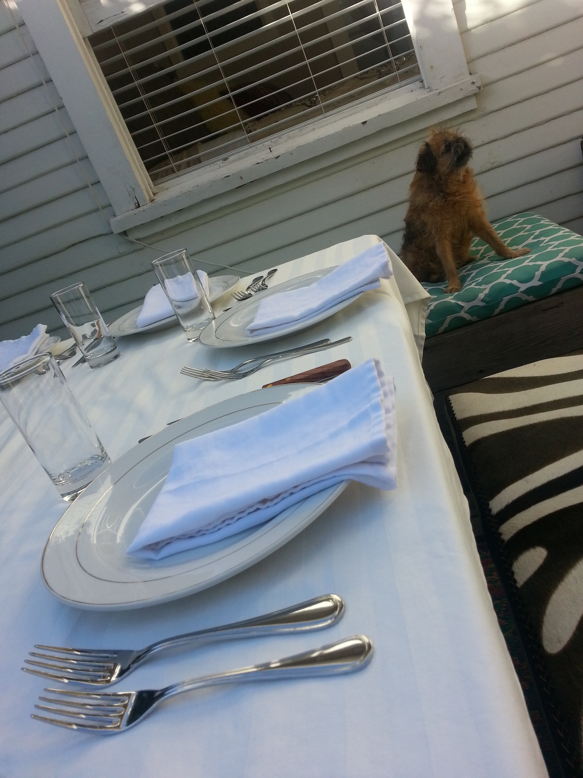 Table setting - and the evening's furry mascot