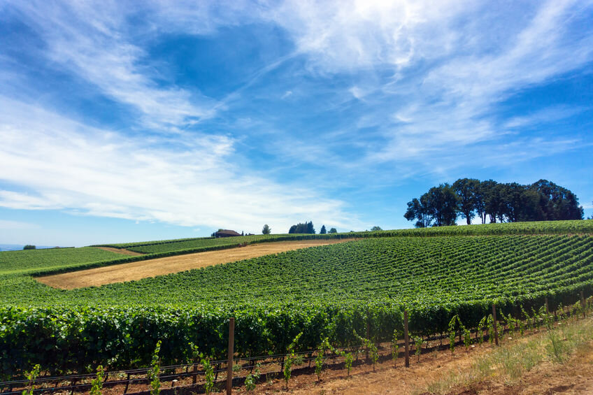 Live next to what you love - With so many winery's in the Willamette Valley it will take you a while to see them all. We can even show you homes that back up to vineyards and wineries .